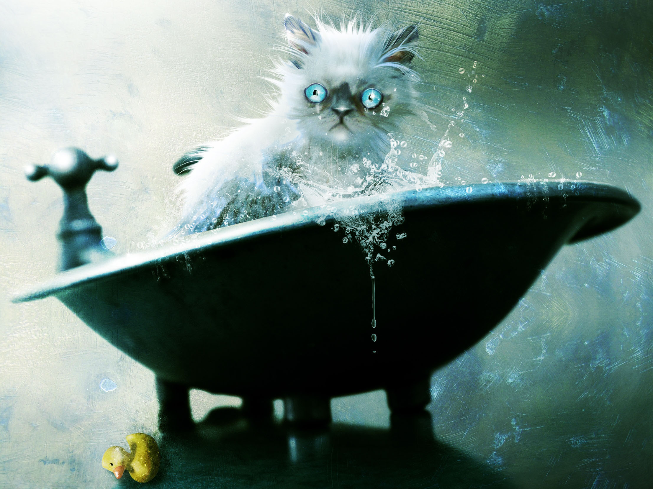 Artistic Cat 2213x1658
