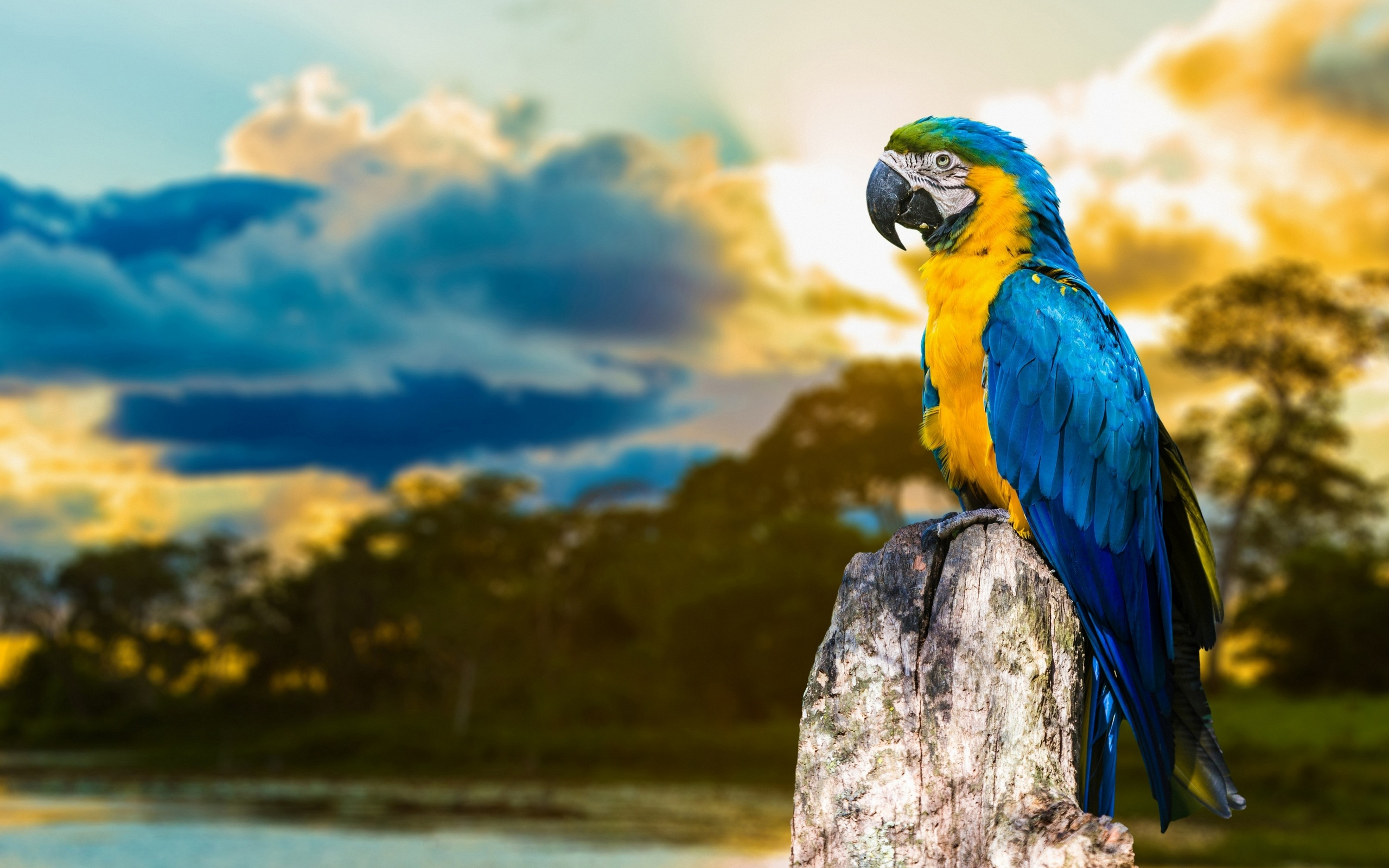 Animal Blue And Yellow Macaw 2560x1600