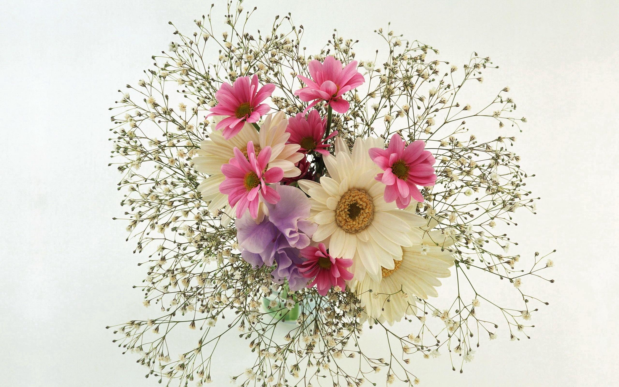 Earth Gerbera Flower Daisy Babys Breath Bouquet White Flower Pink Flower Wallpaper Resolution 2560x1600 Id 76614 Wallha Com