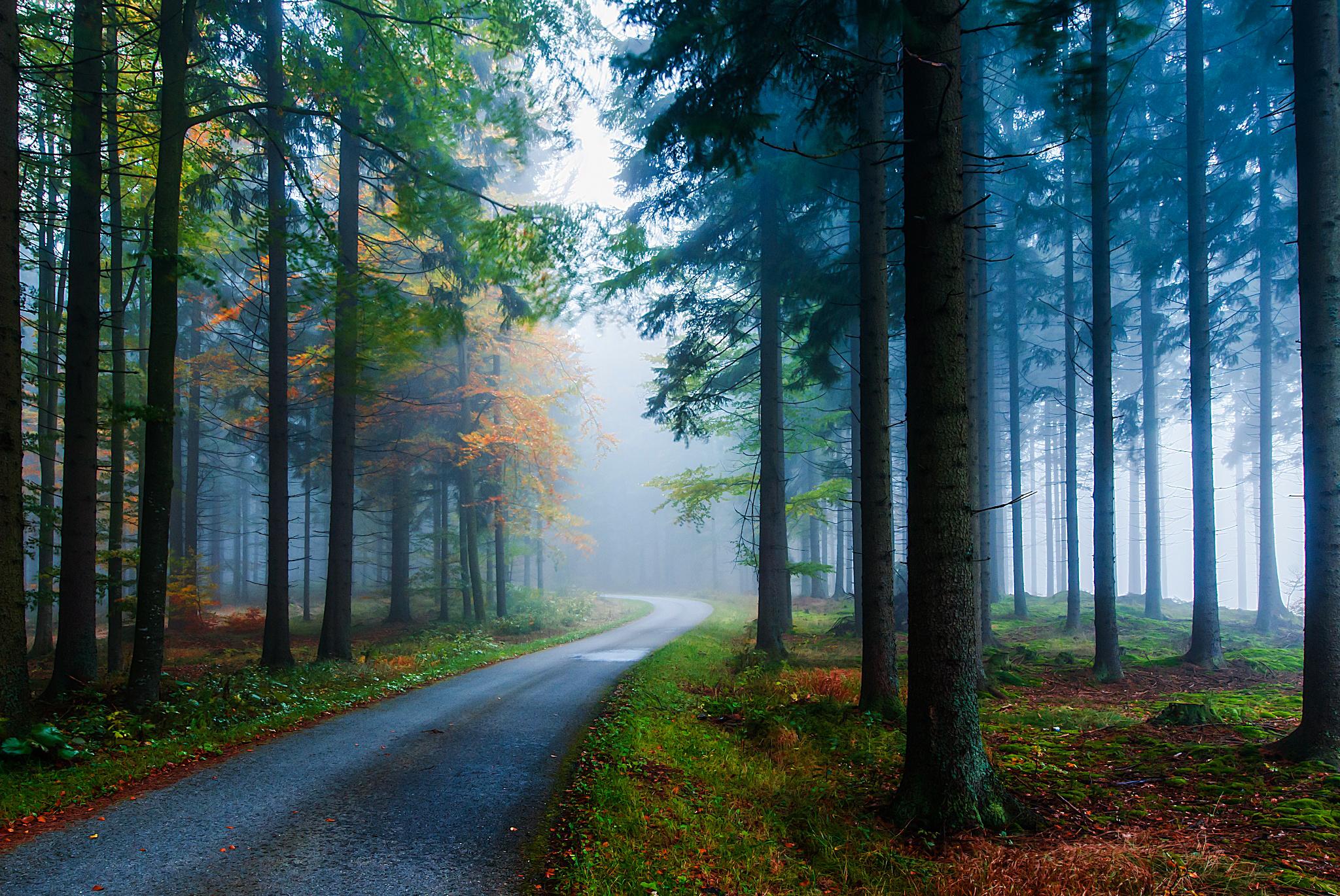 Nature Forest Road Fall Tree Foliage Fog 2048x1370
