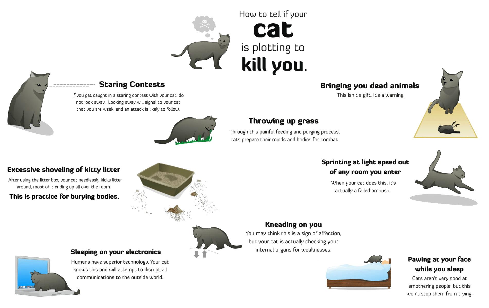 Cat Humor 1900x1200