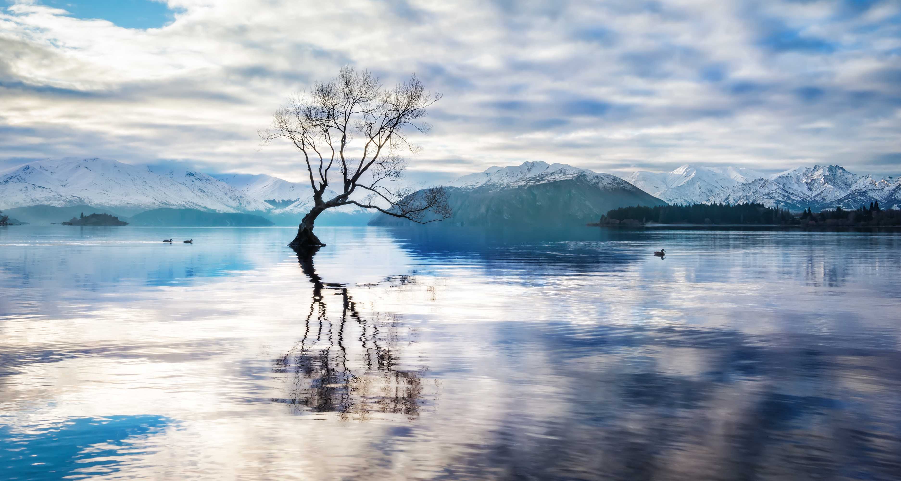 Lake Landscape Lonely Tree Mountain Reflection Tree 3747x2000