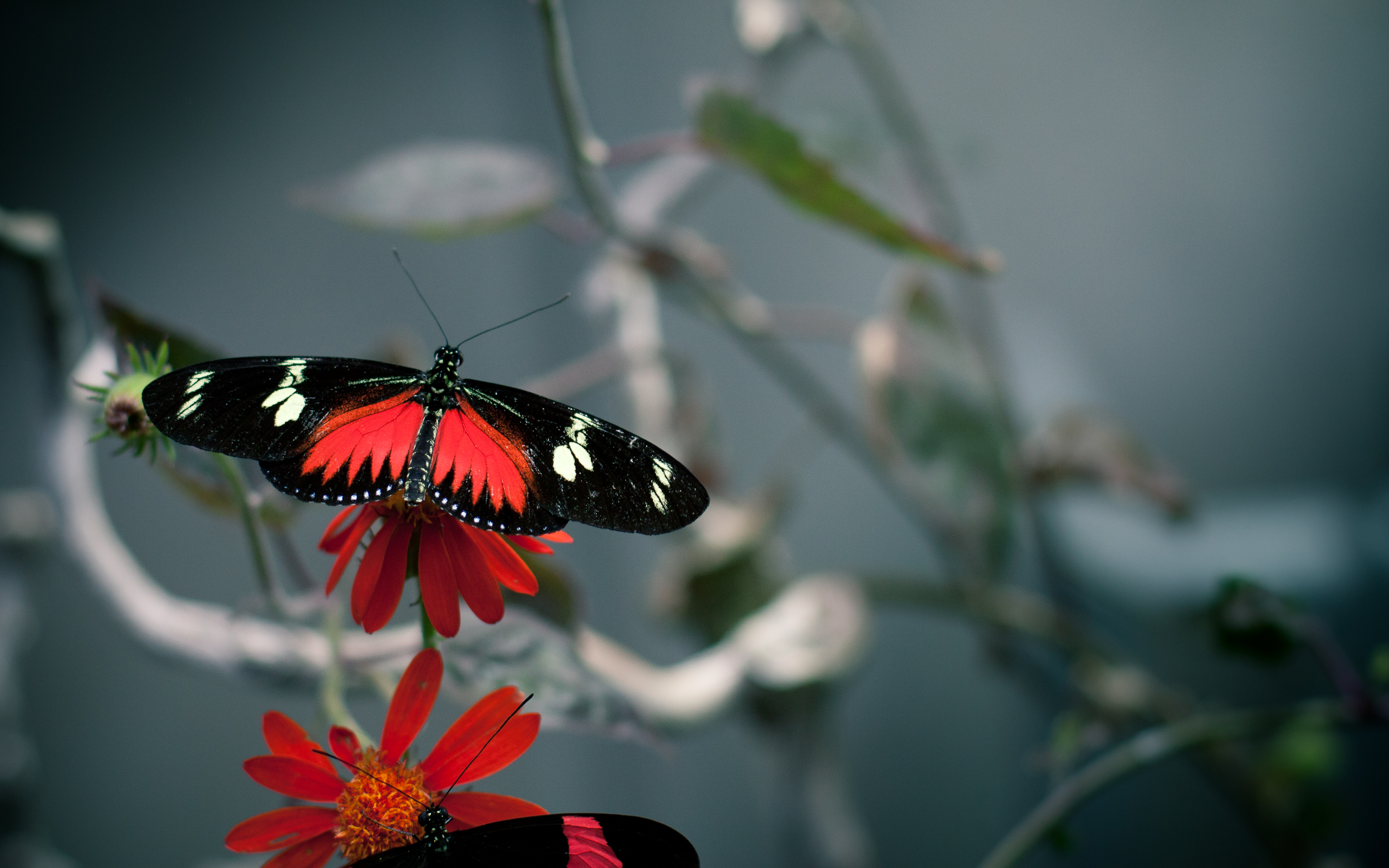 Animal Butterfly 2560x1600