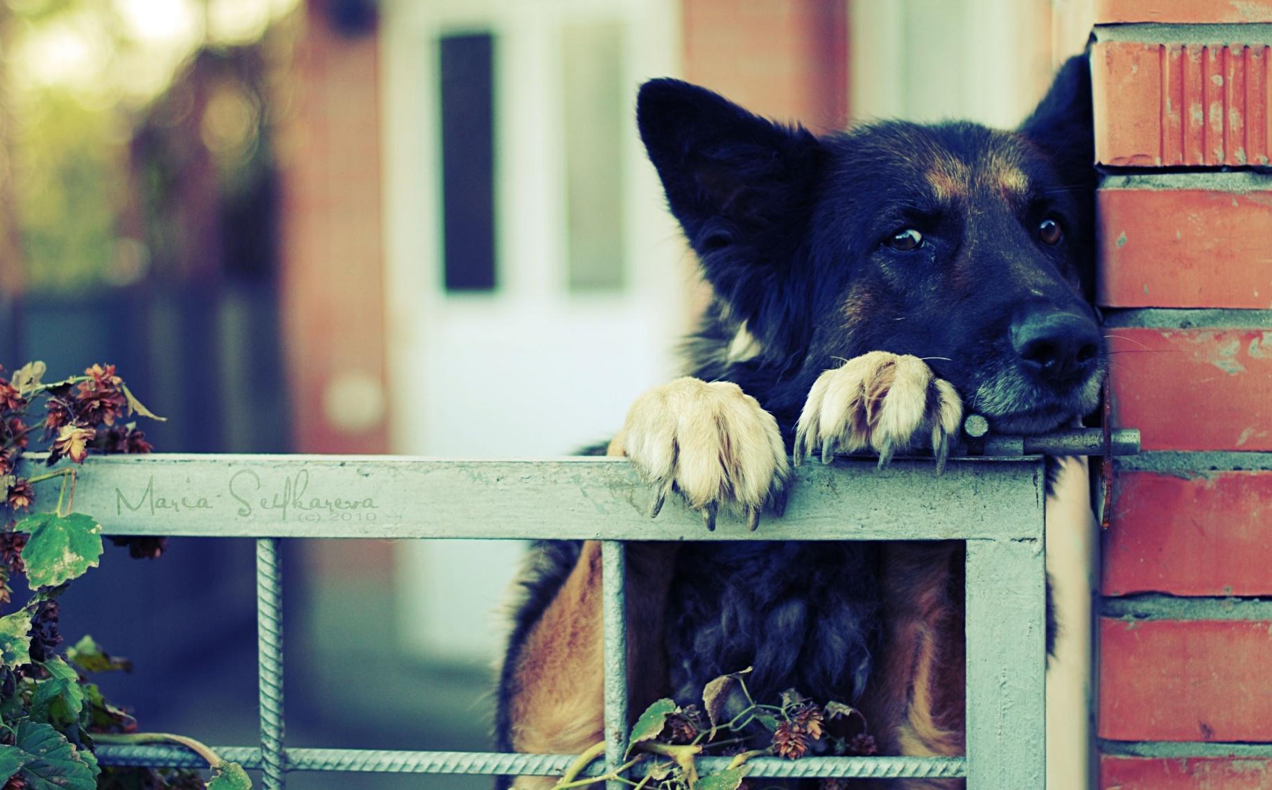 Dog 1835x1140