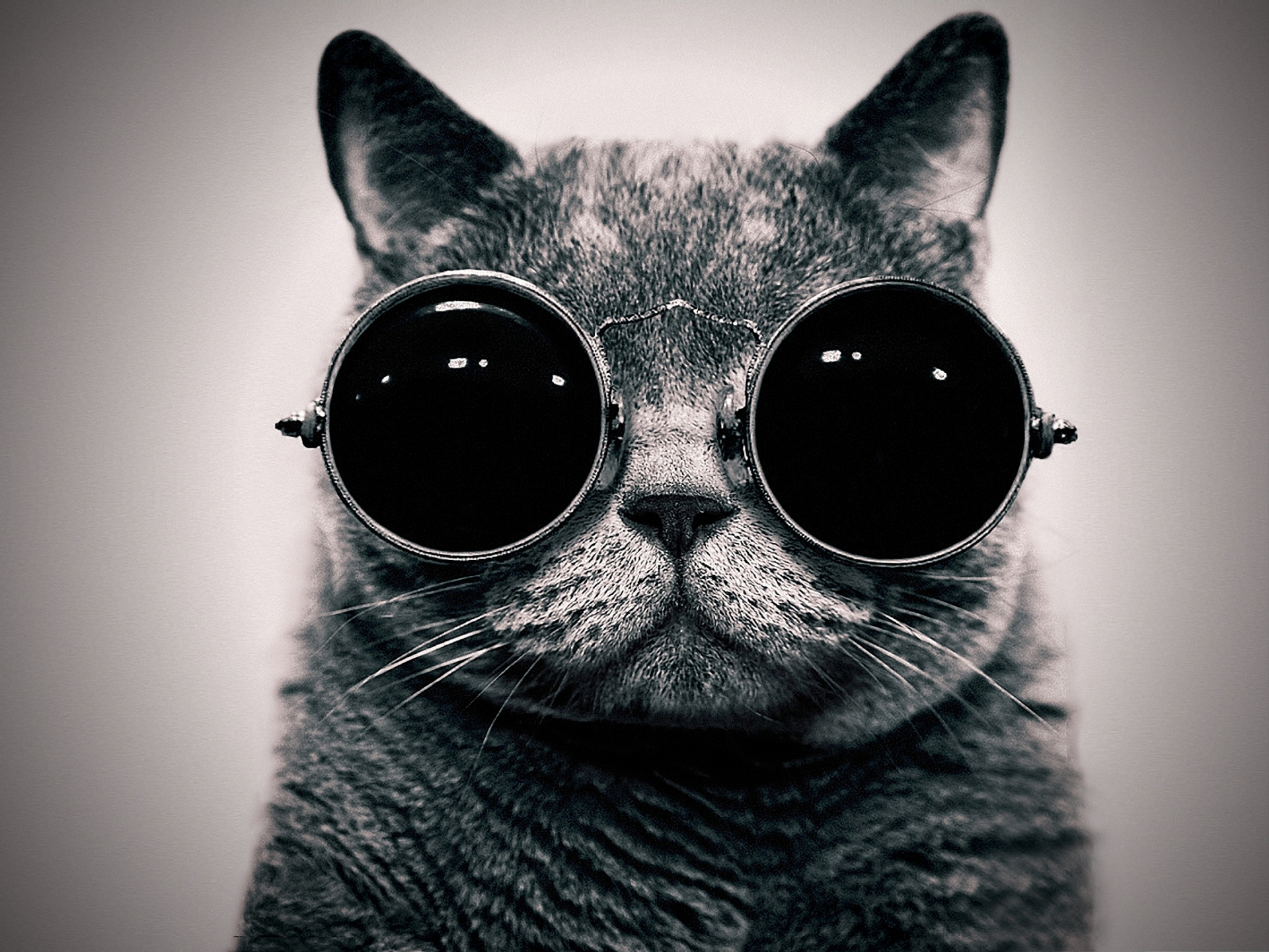 Animal Cat 1920x1440