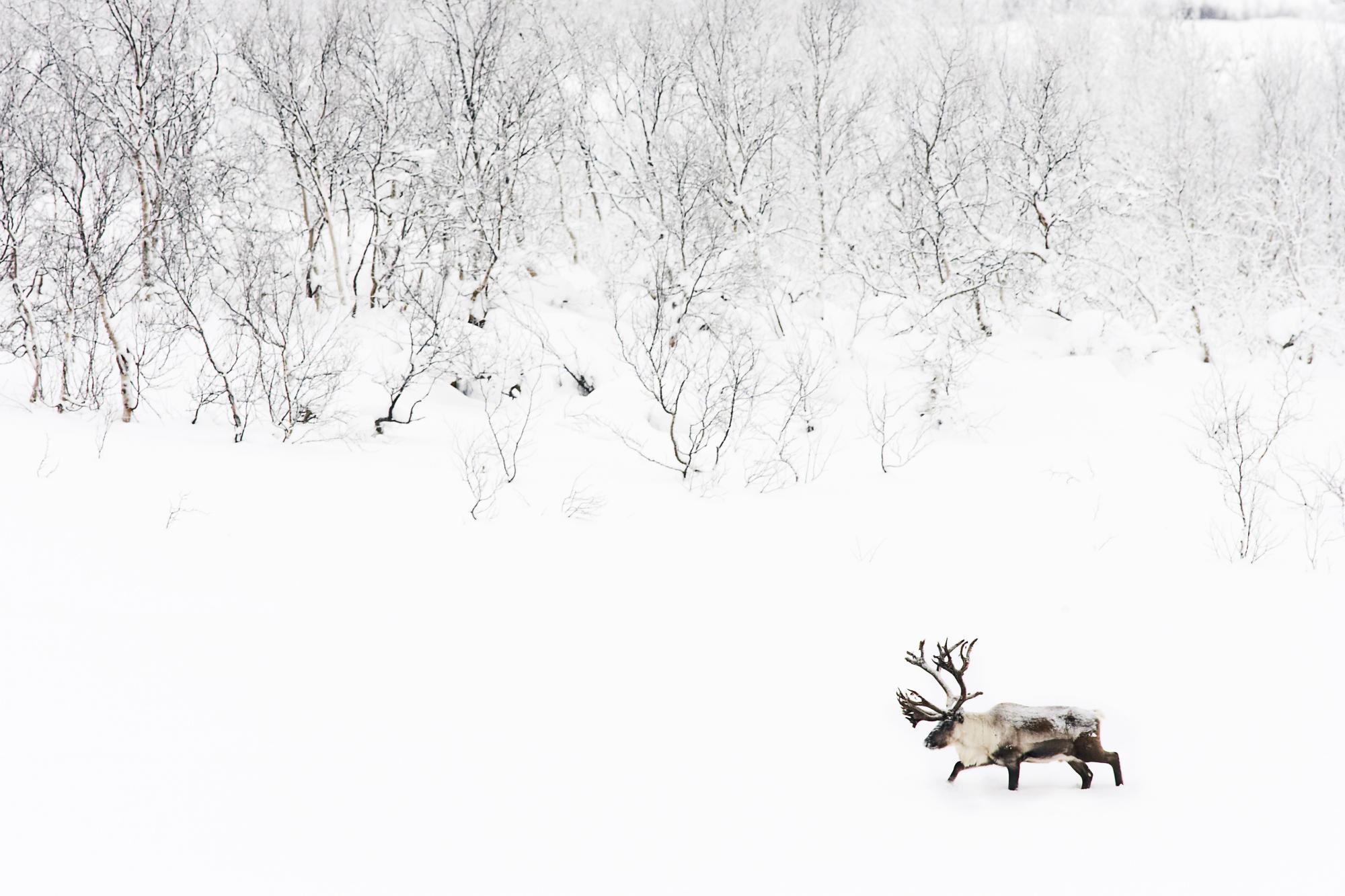 Animal Elk 2000x1333