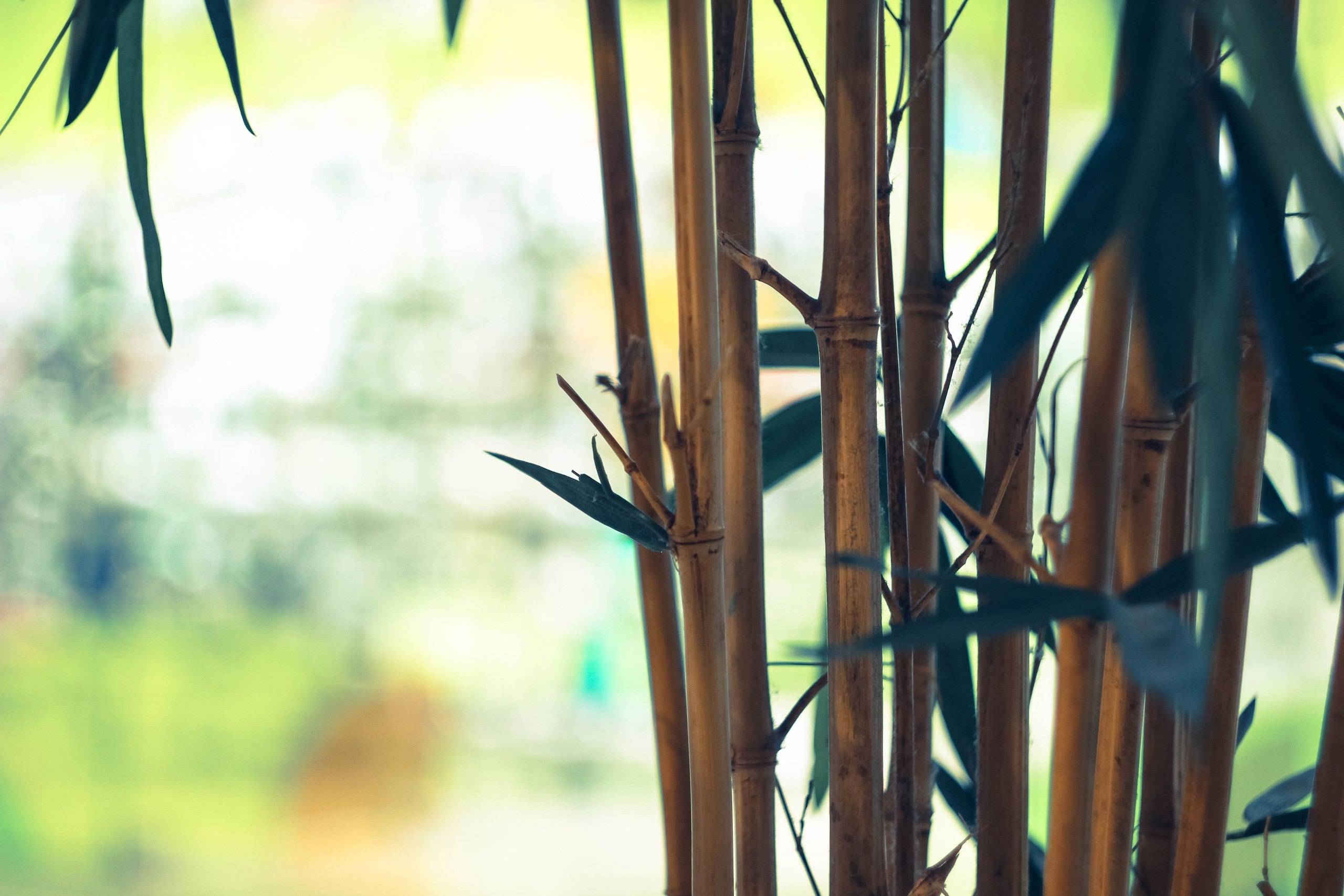 Bamboo Plant Tree 2560x1707