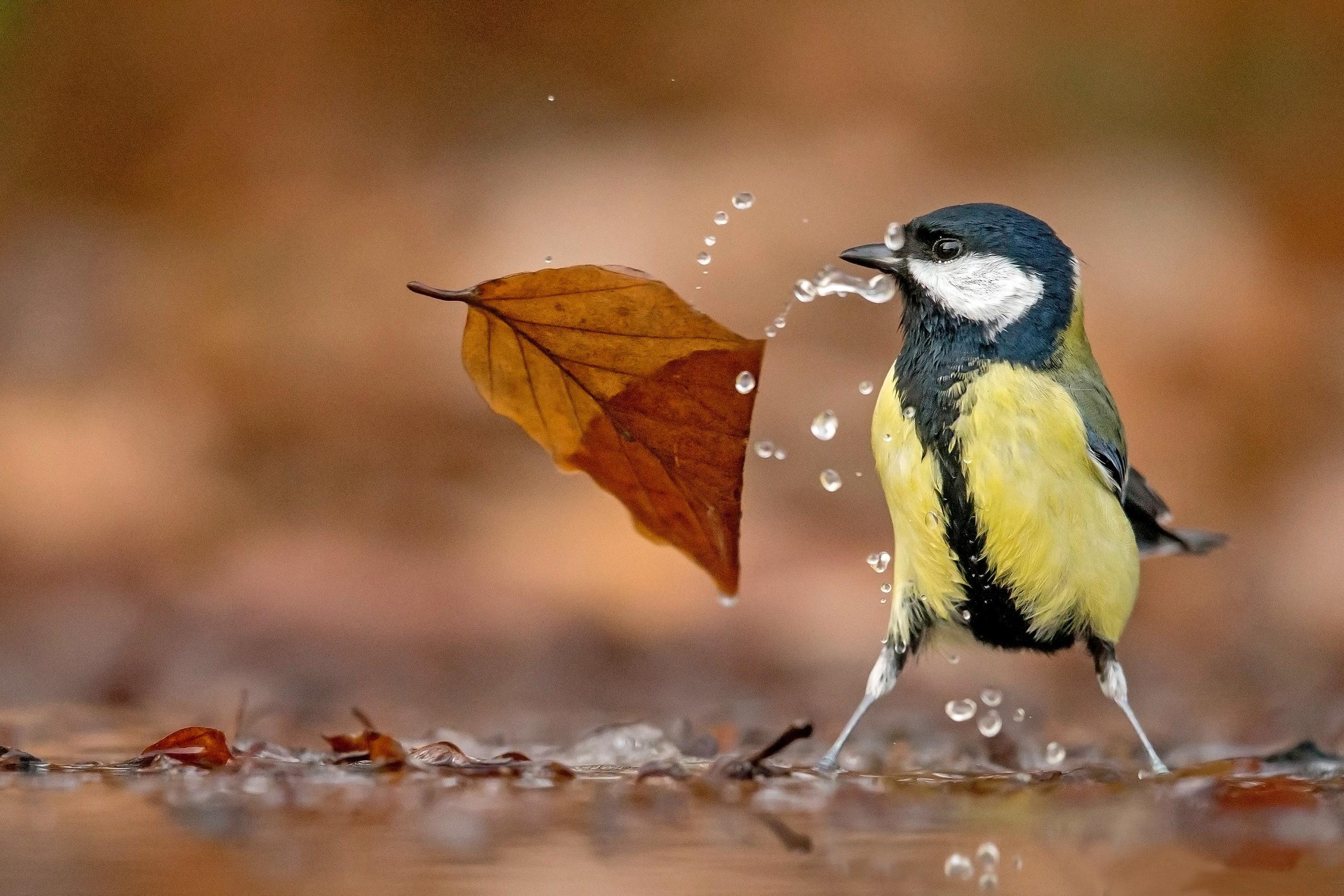 Bird Leaf Titmouse Wildlife 2560x1707