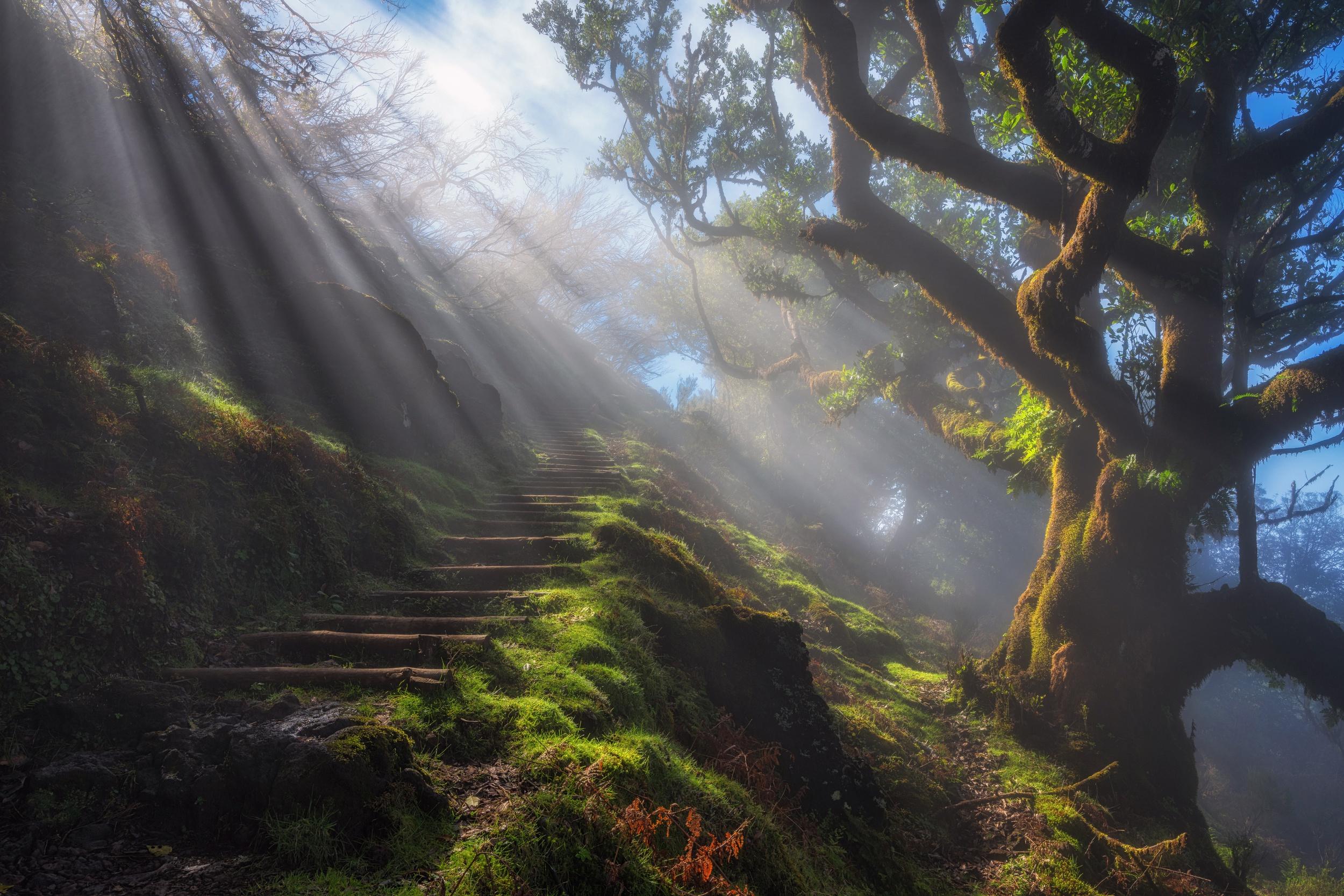 Nature Steps Sunbeam Tree 2500x1667