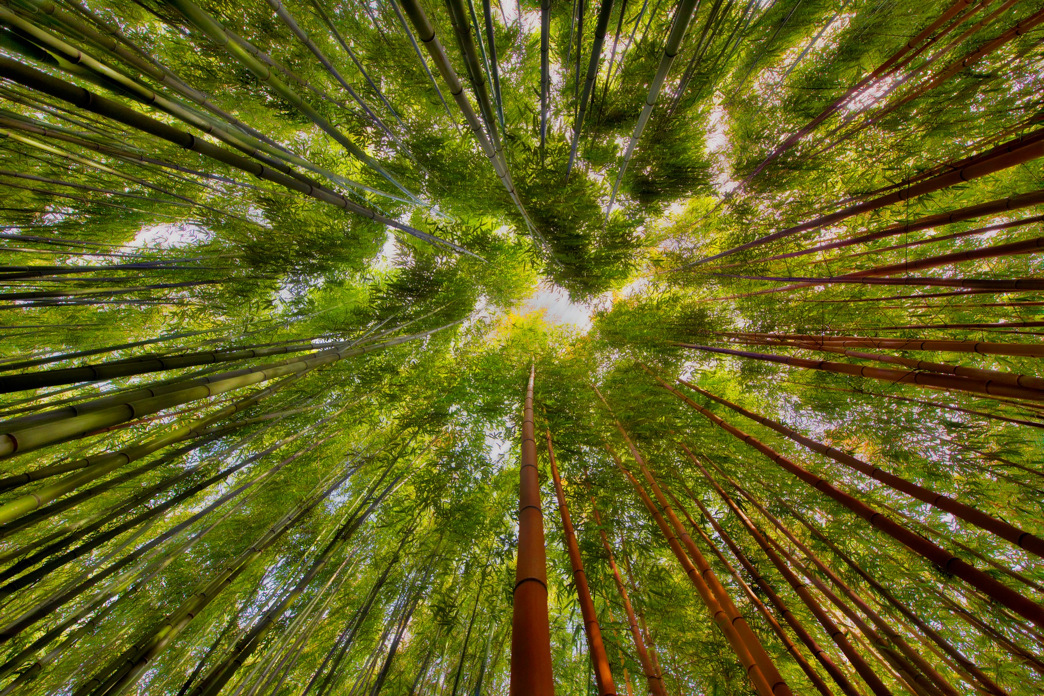 Bamboo Greenery Nature 2048x1367