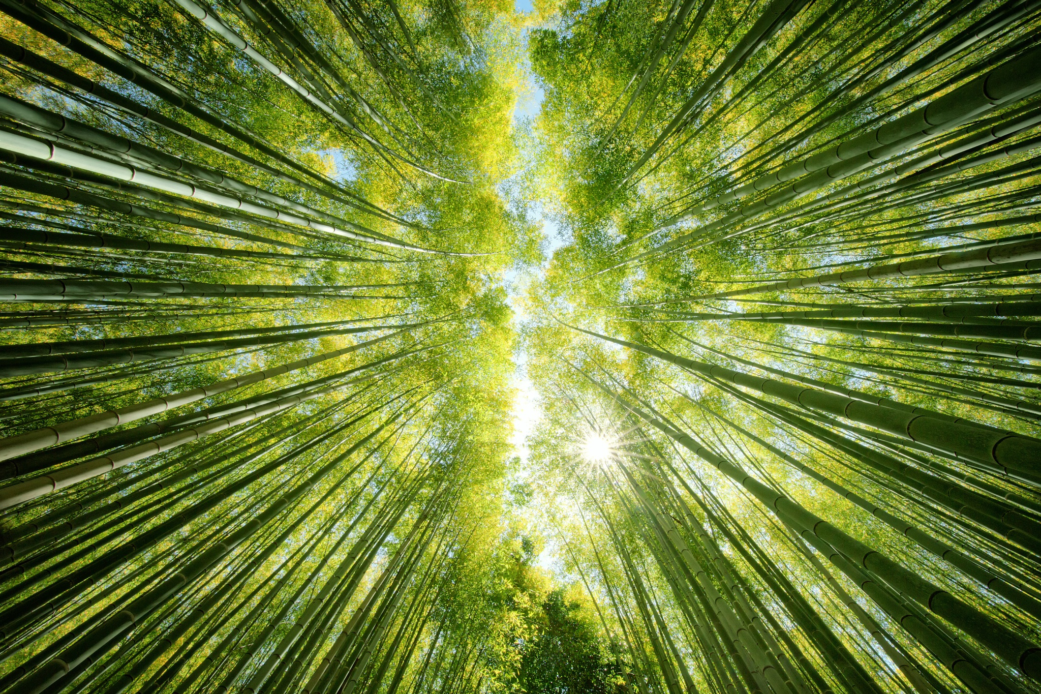 Bamboo Forest Greenery Nature 2048x1365