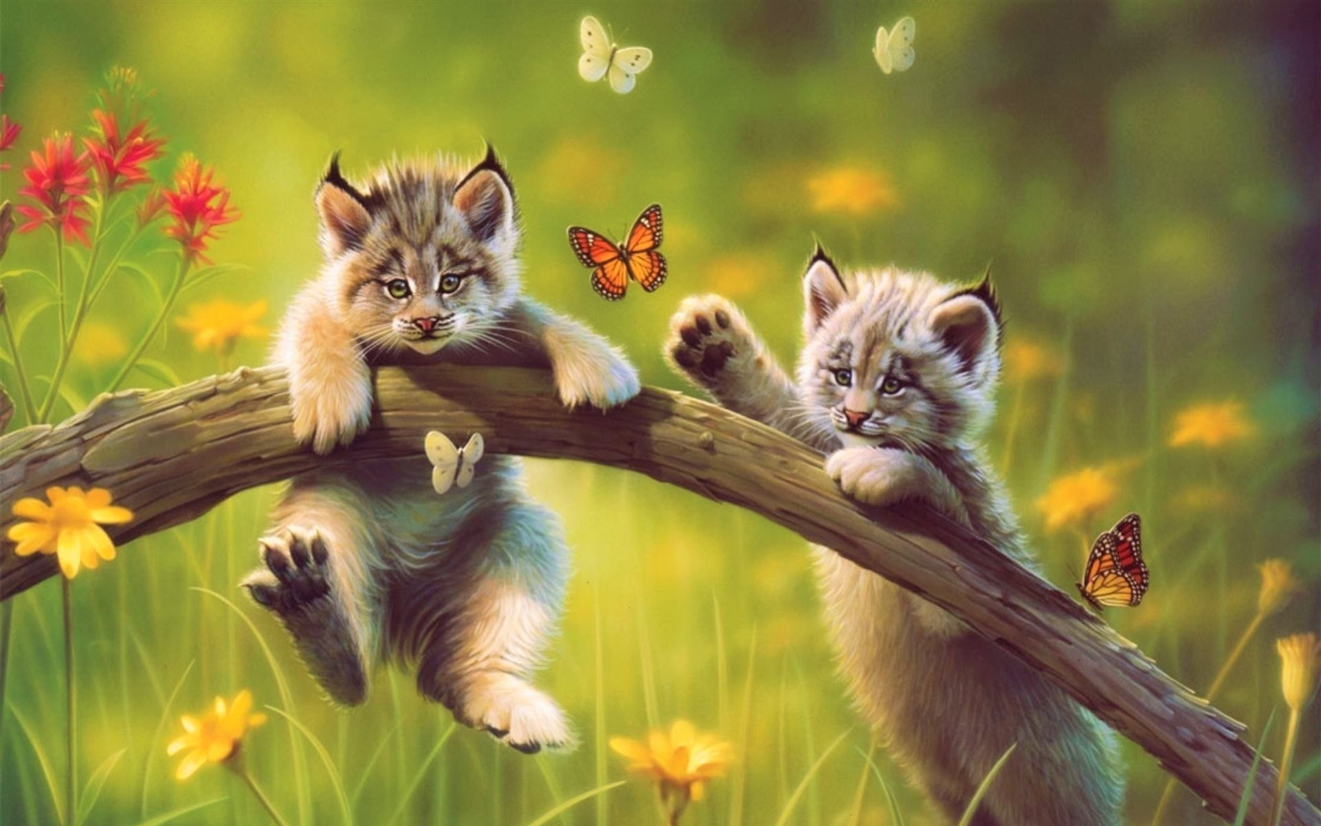 Artistic Baby Animal Butterfly Cat Cub Cute Lynx Meadow 1920x1200