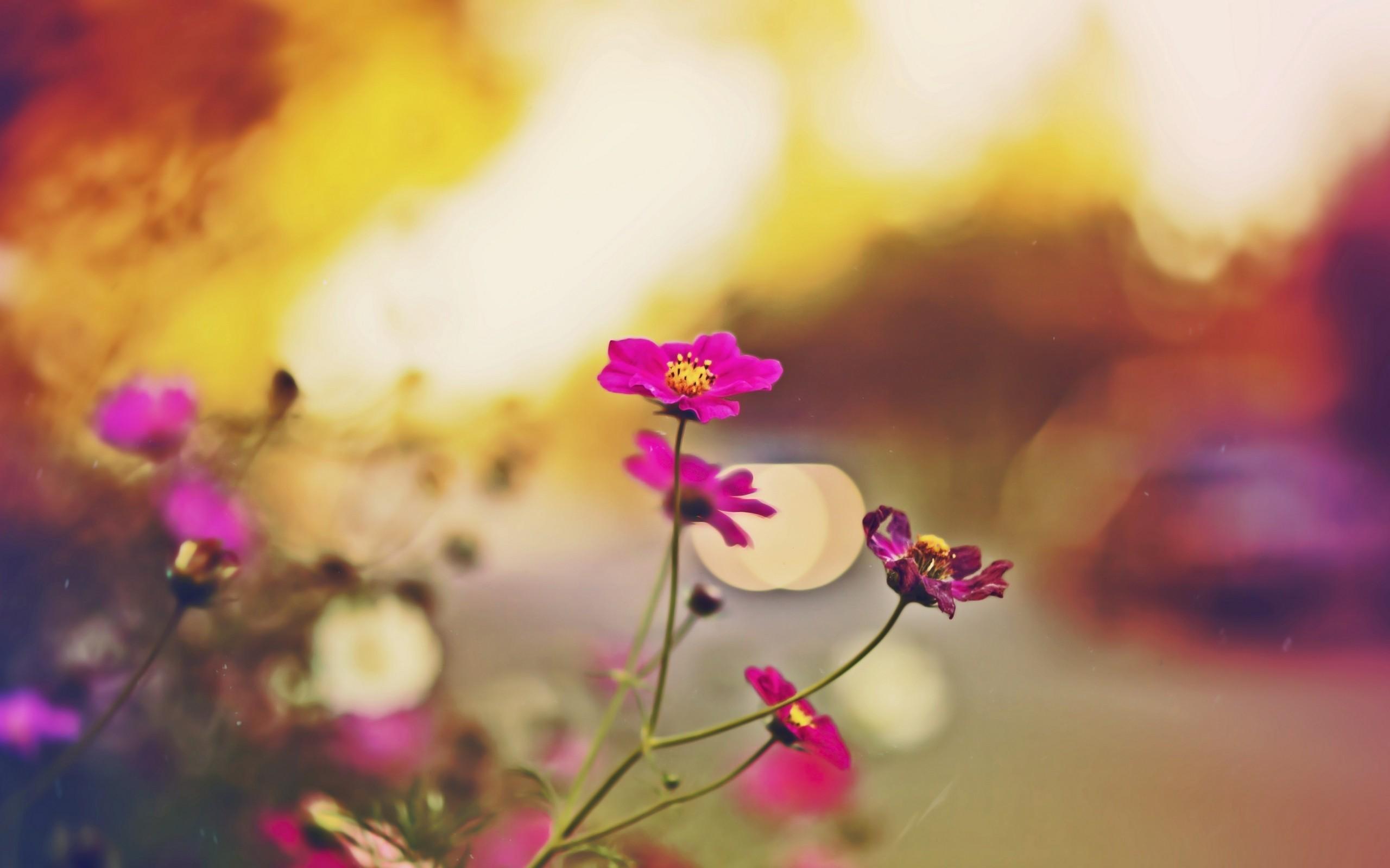 Earth Flower 2560x1600
