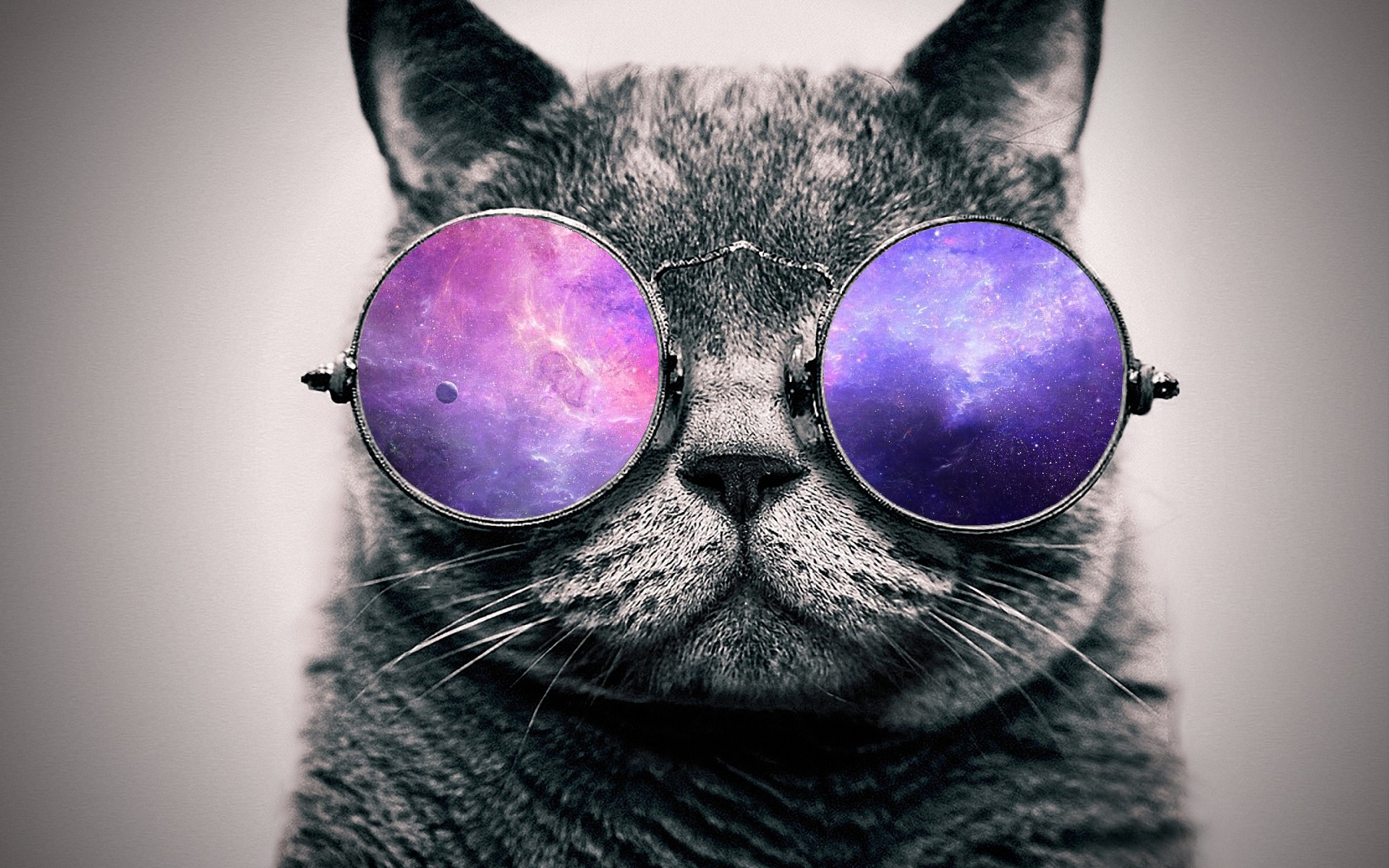 Animal Cat 1920x1200