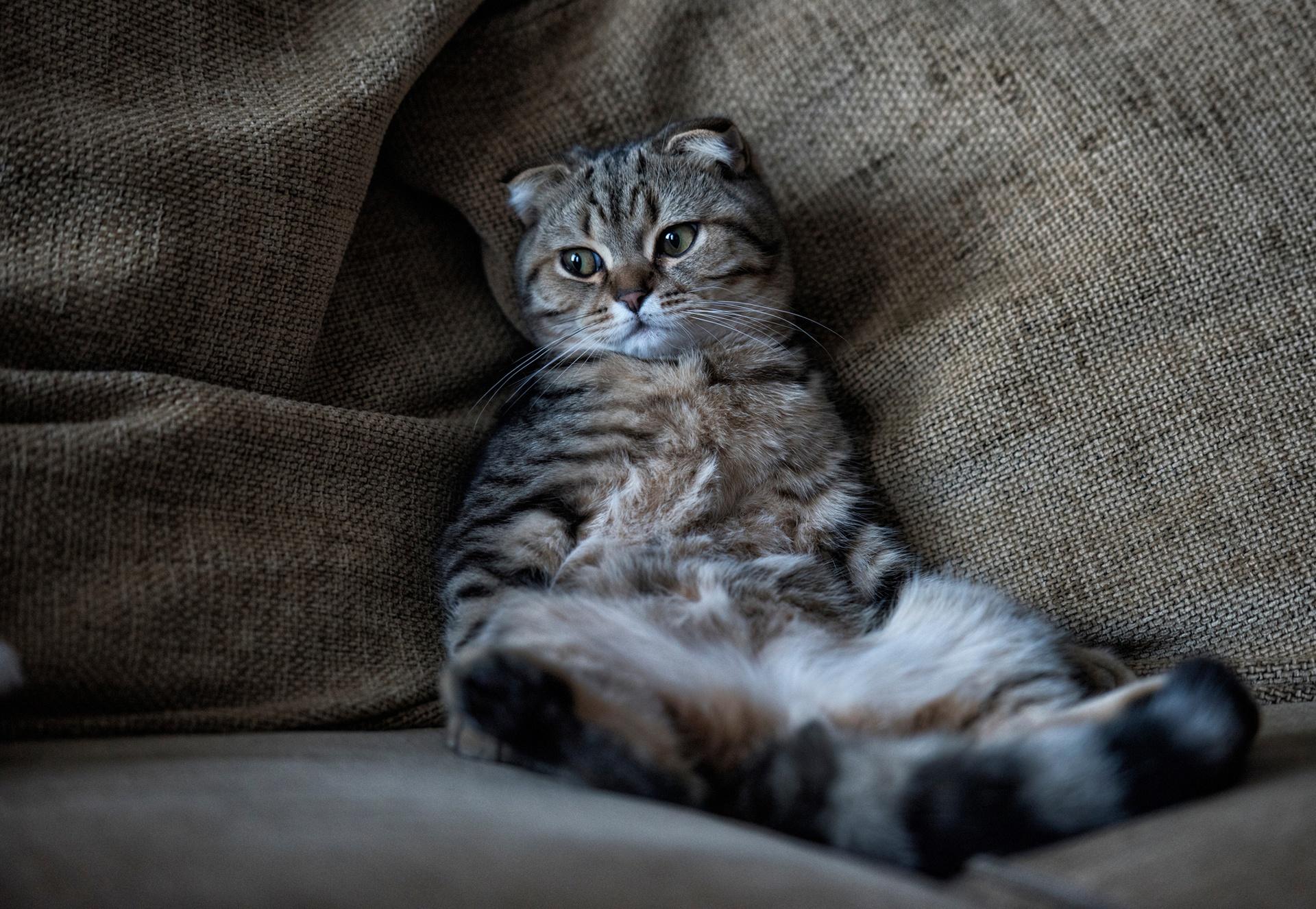 Cat Pet 1920x1326