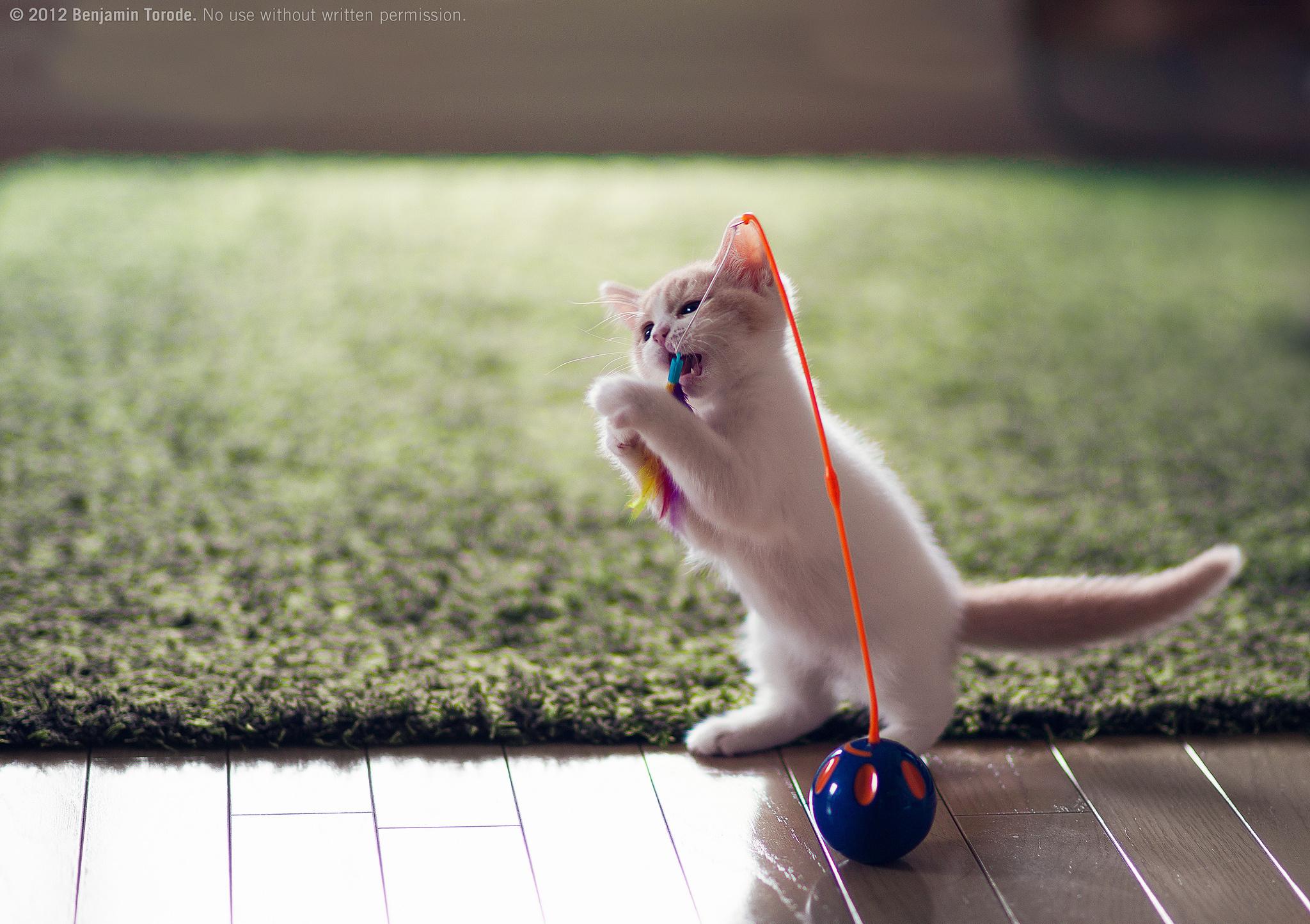 Cute Kitten 2048x1445