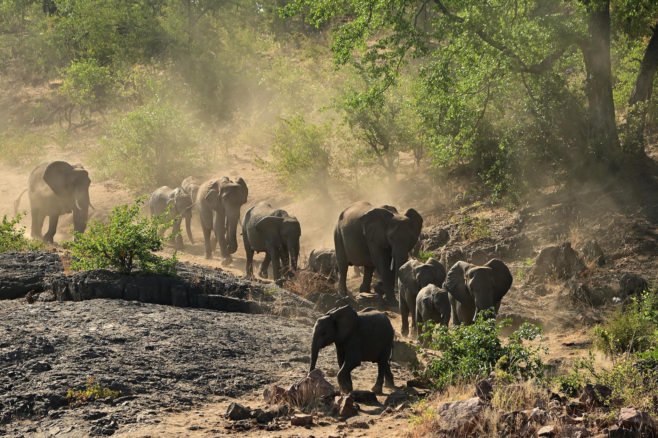 Baby Animal Elephant Wildlife 2700x1800