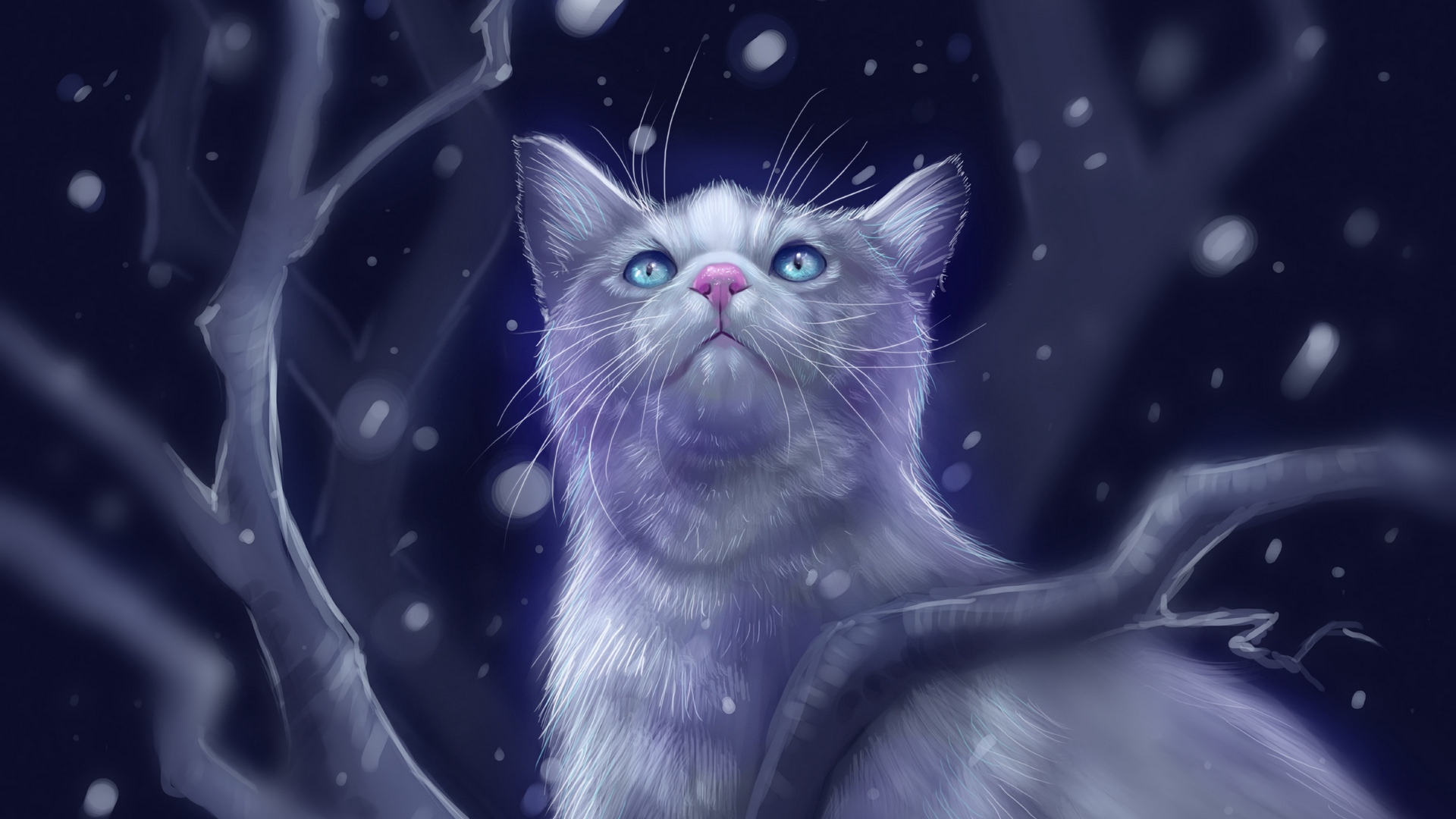 Cat Night 1920x1080