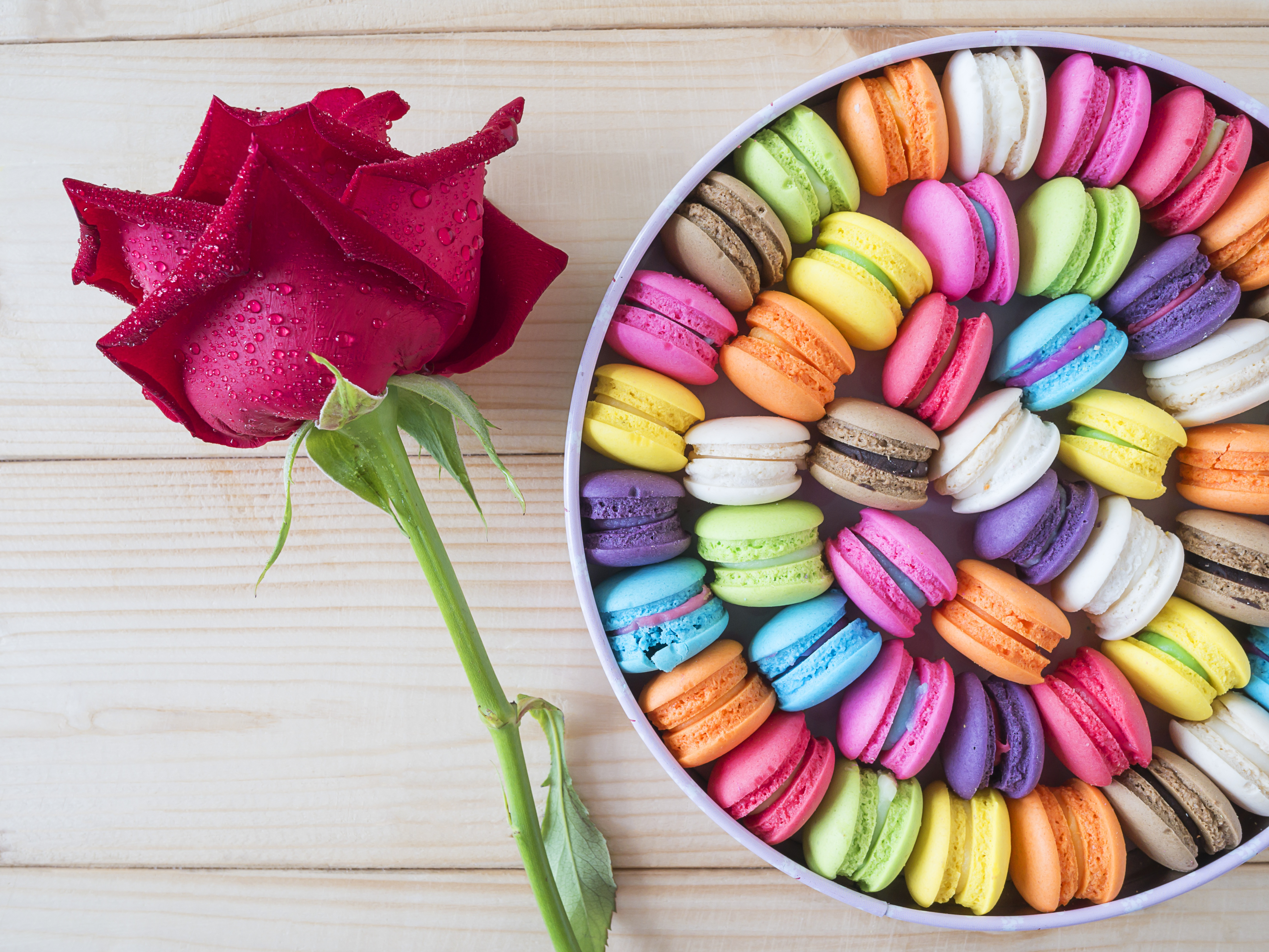 Colors Flower Macaron Rose Sweets 4592x3448