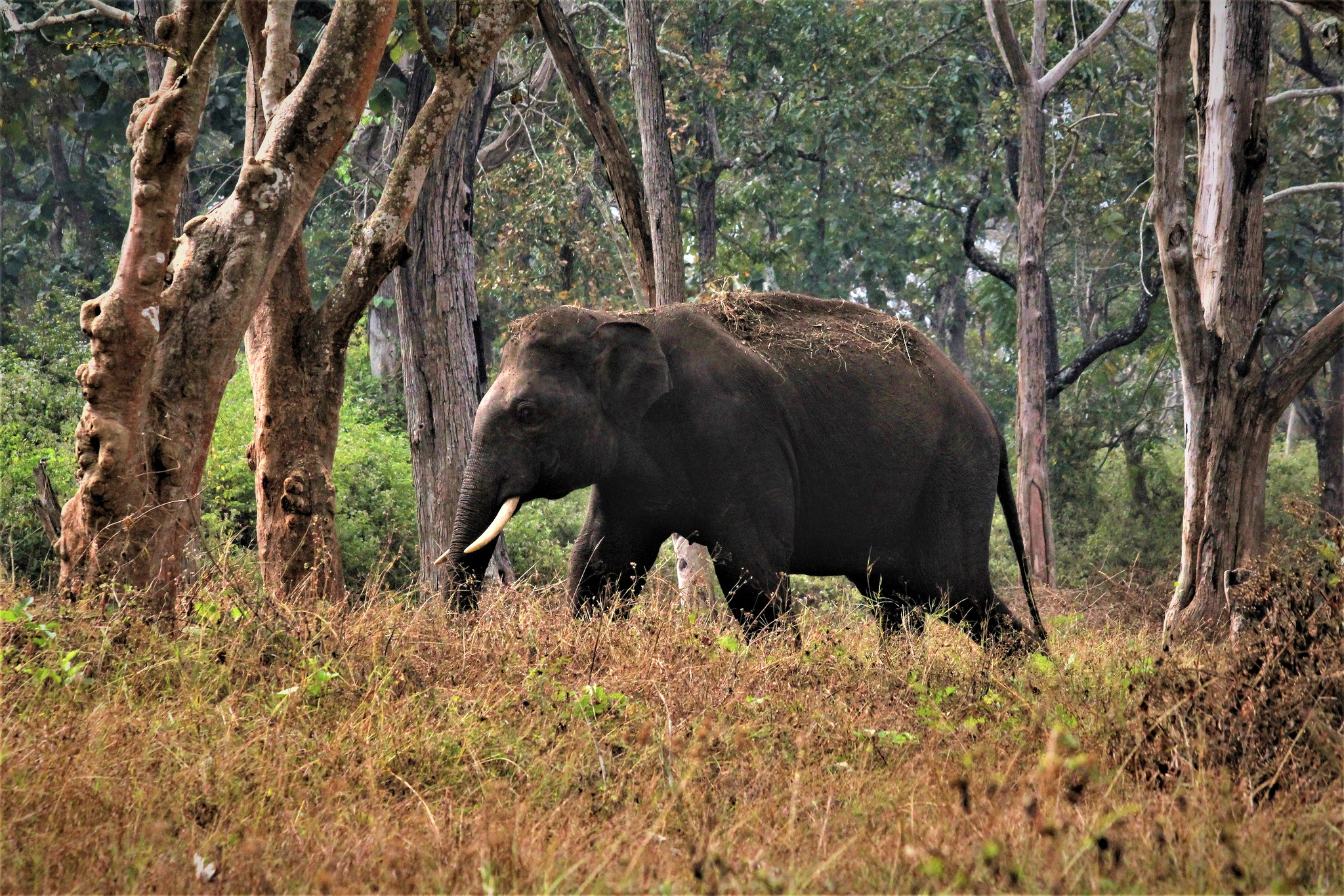 Elephant Wildlife 2048x1365