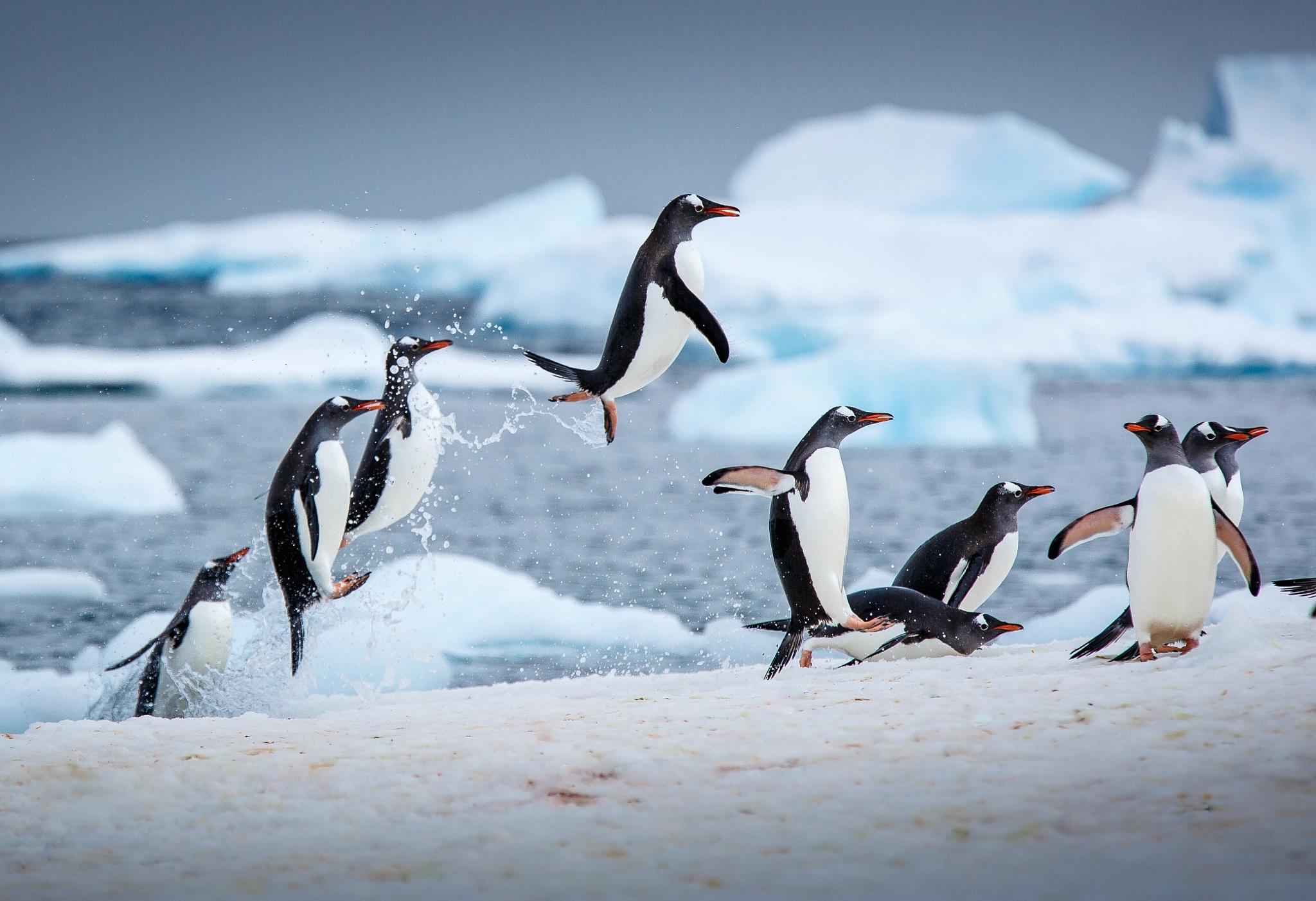 Penguin Wildlife 2048x1402