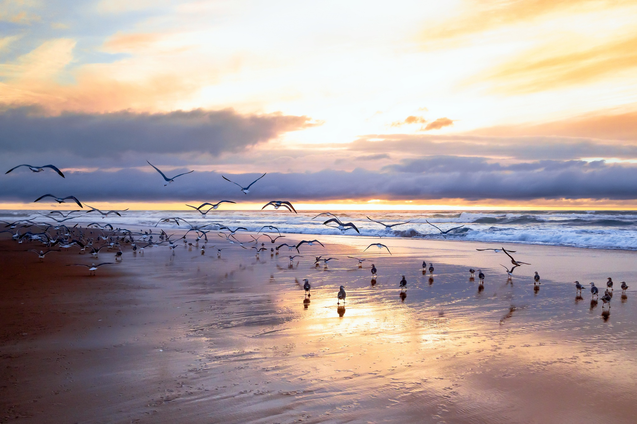 Beach Bird Cloud Horizon Seagull Sky 2048x1365