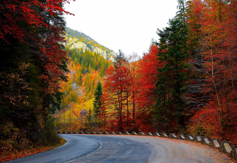 Fall Road 3000x2065