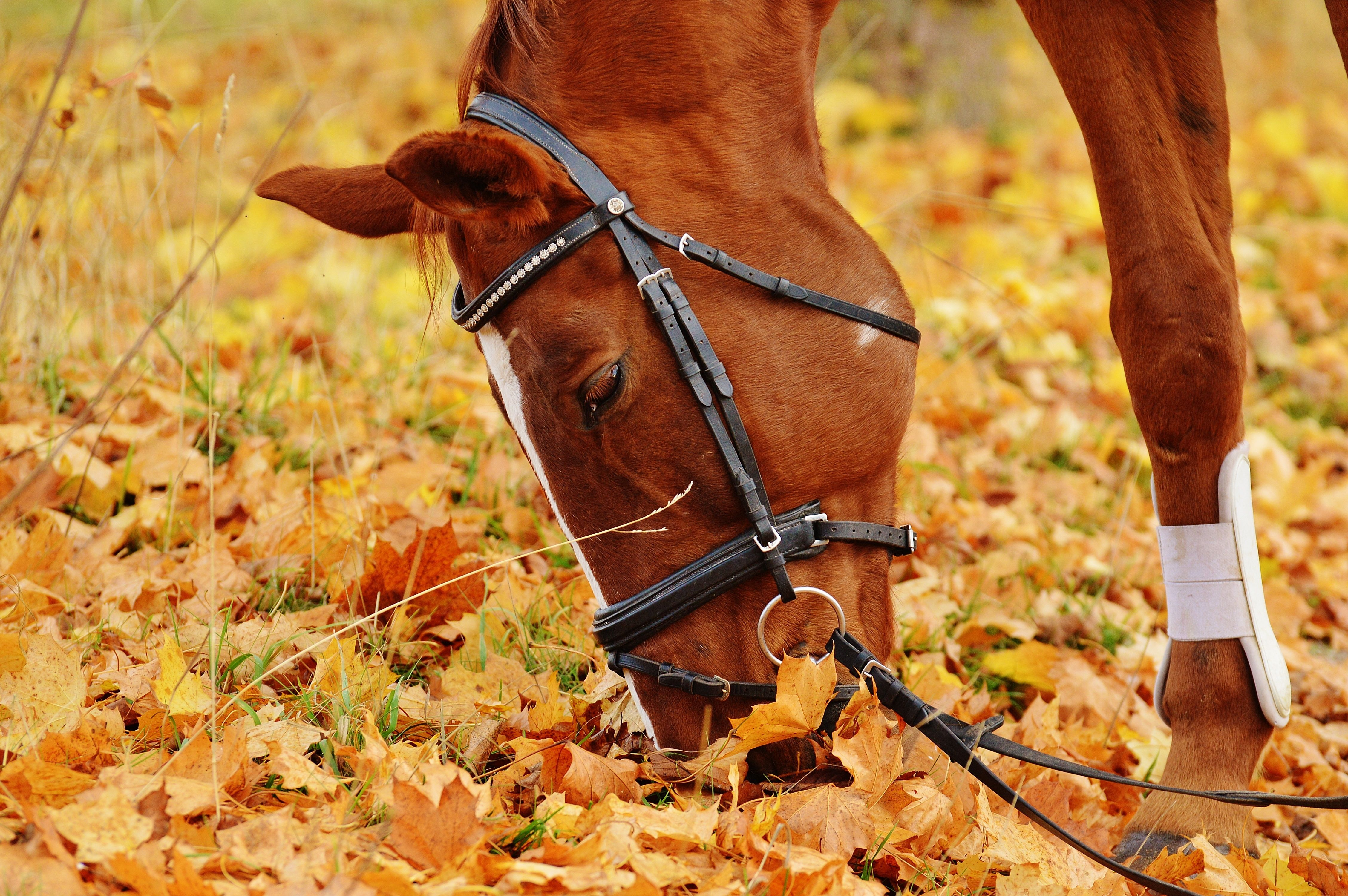 Animal Horse 4512x3000