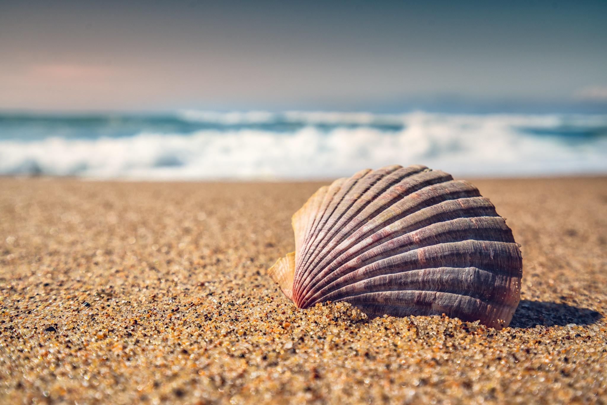 Macro Sand Shell 2048x1366