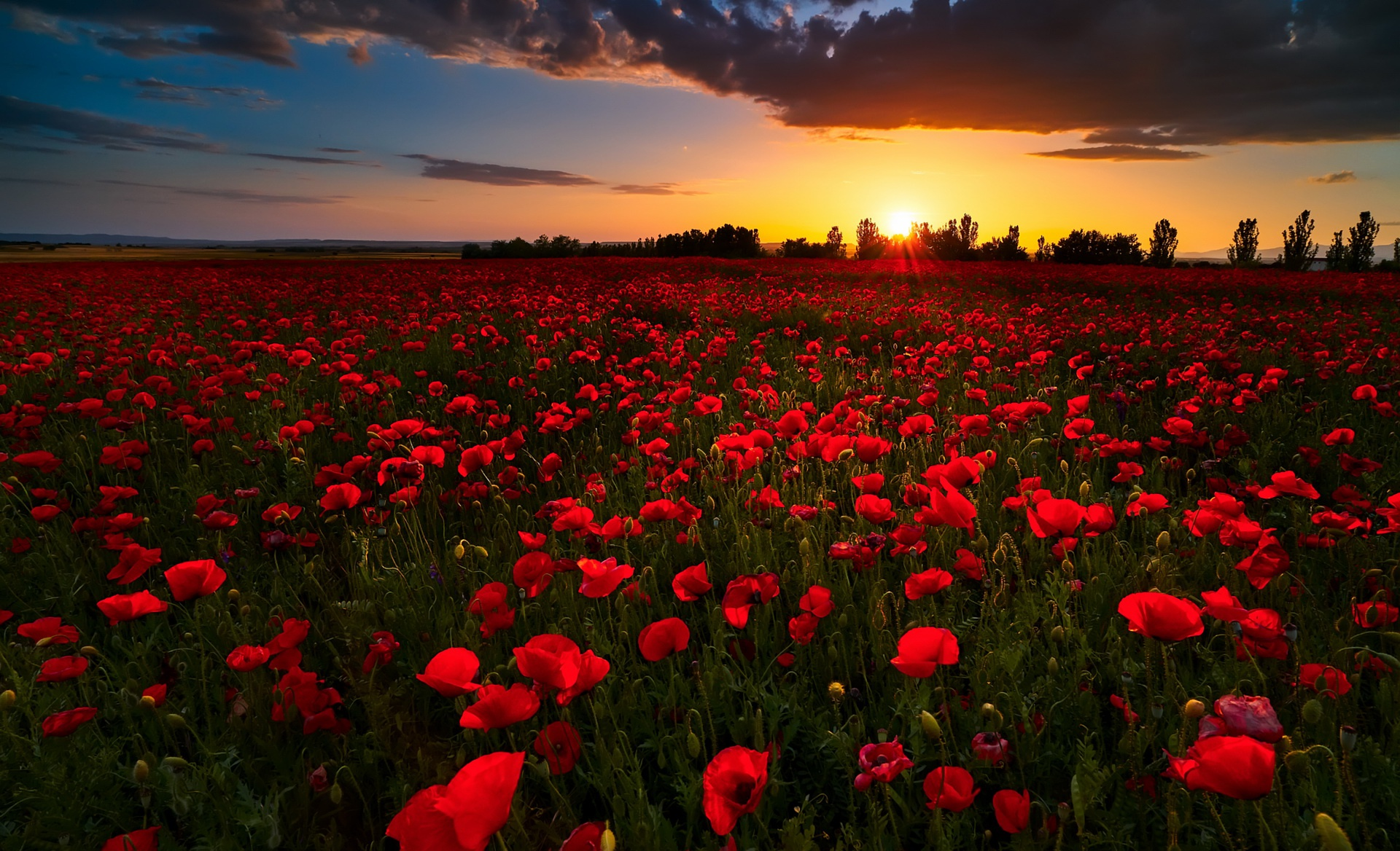 Field Flower Horizon Nature Poppy Red Flower Summer Sunrise 1920x1168
