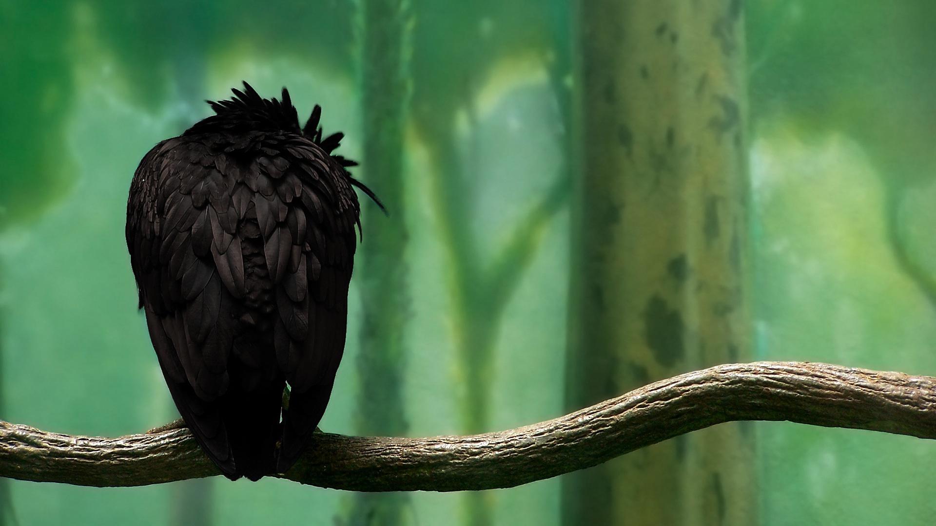 Crow 1920x1080