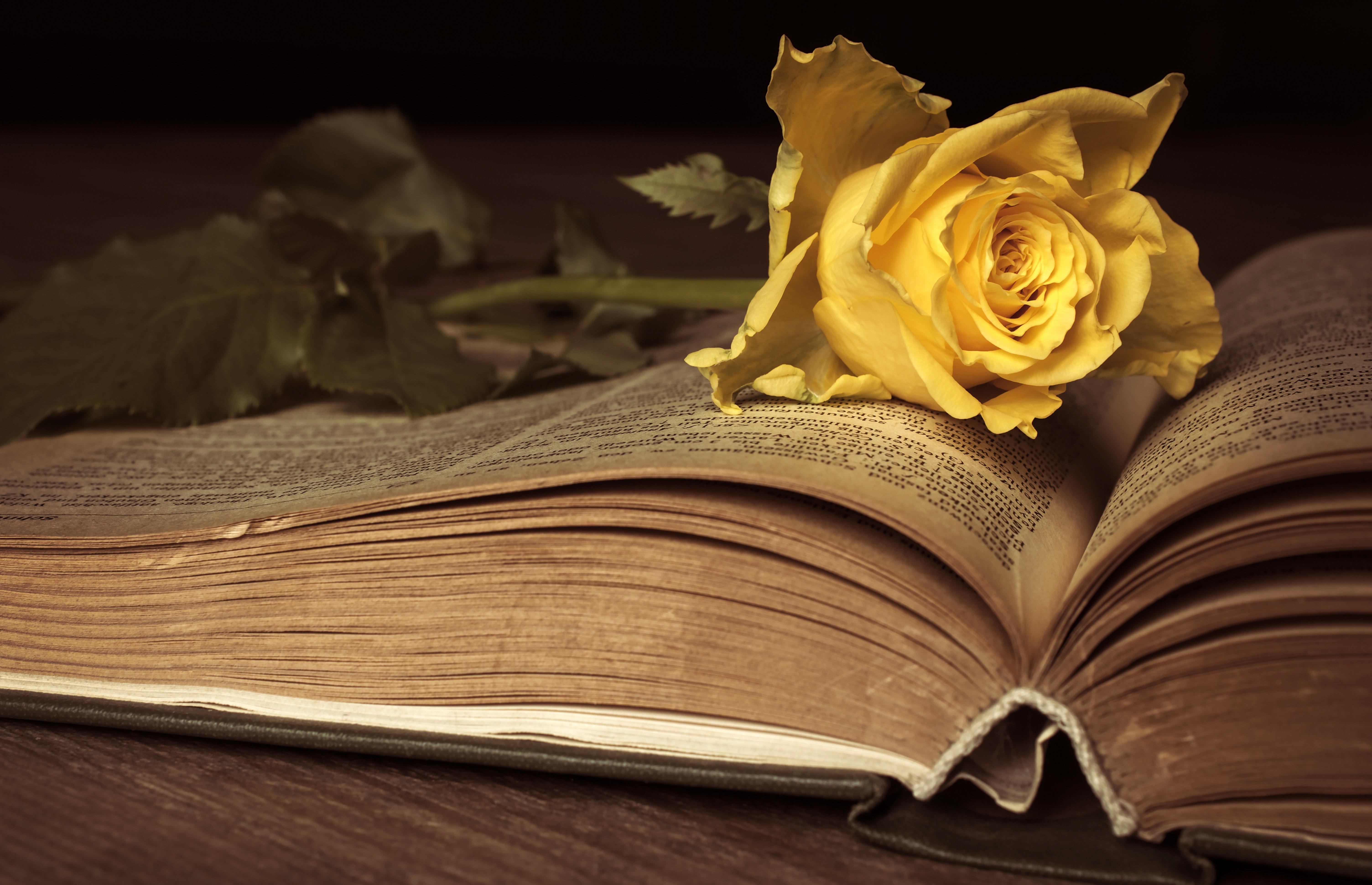 Book Flower 6016x3882