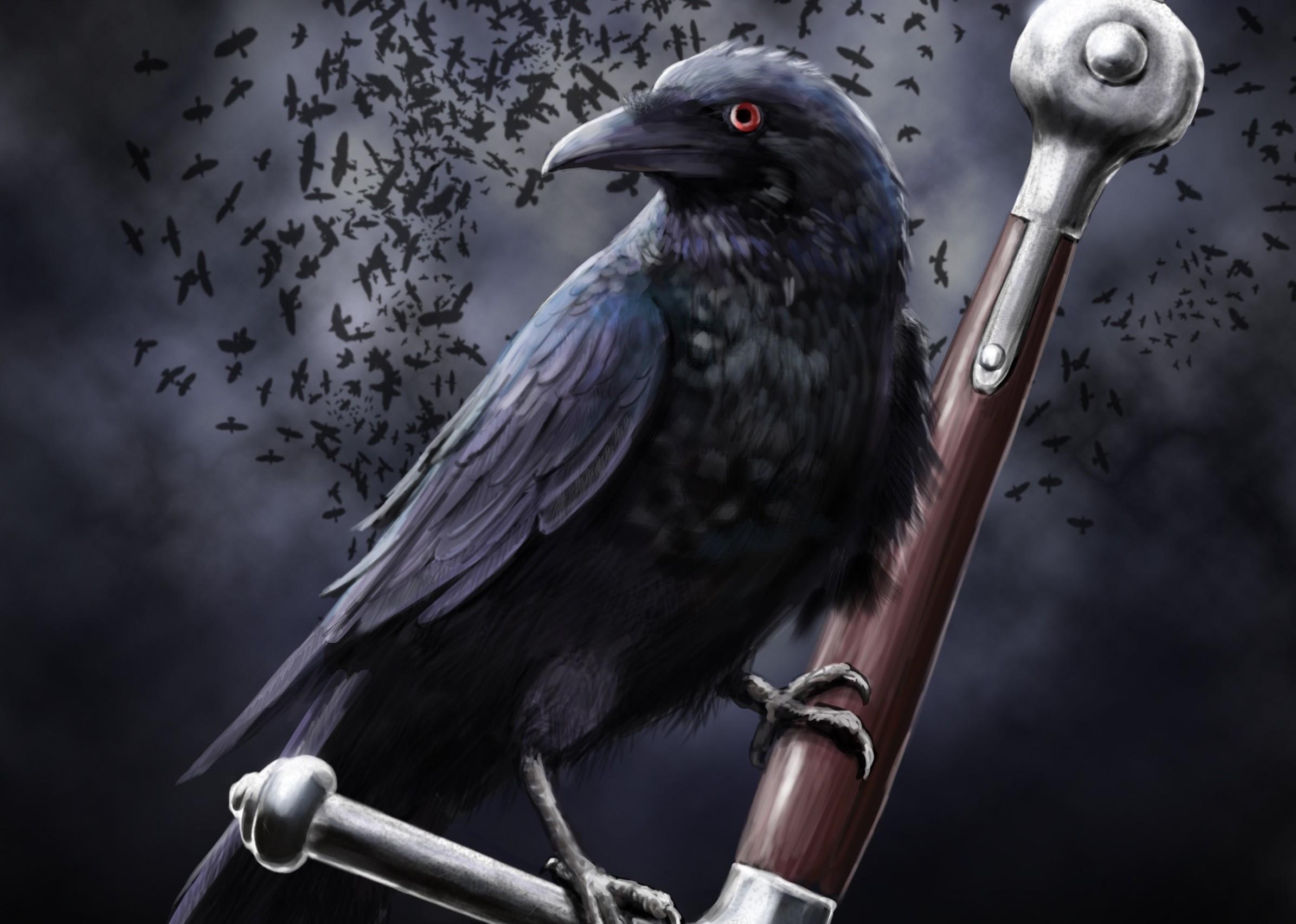 Crow Raven 2390x1705