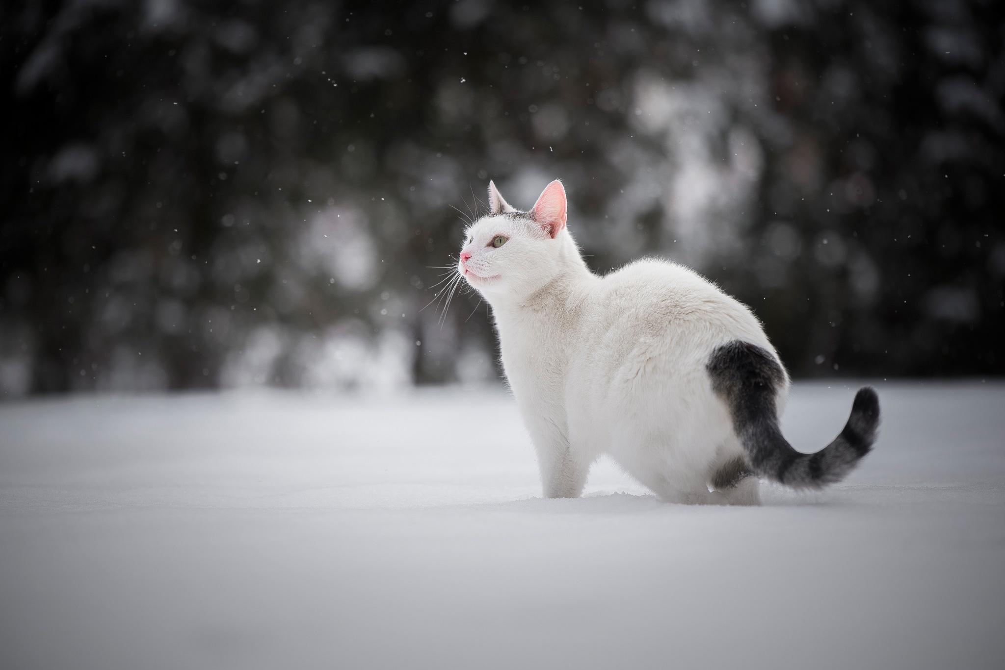 Cat Pet Winter 2048x1367