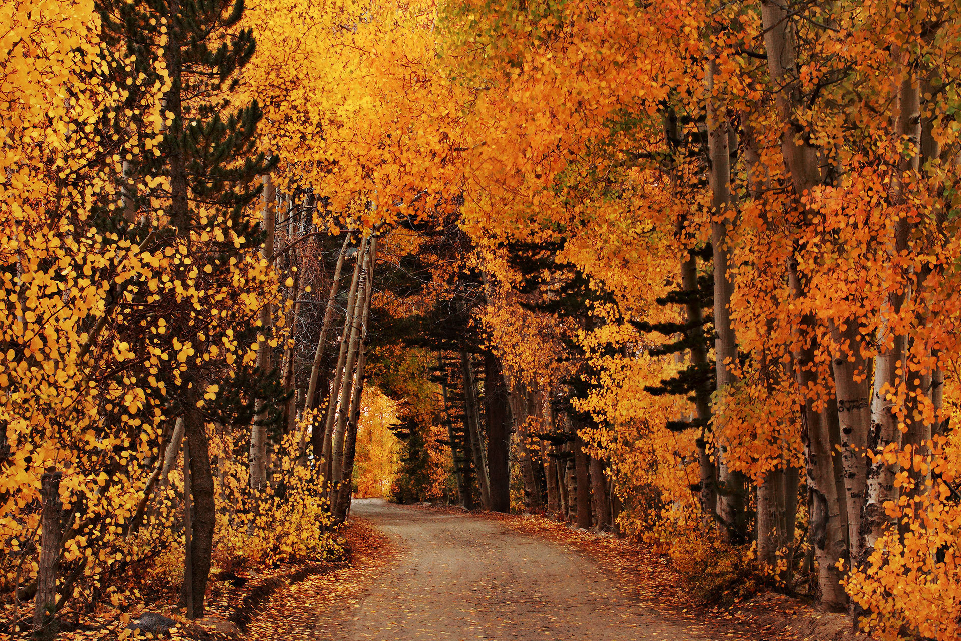 Dirt Road Fall Foliage Forest Road Orange Color 1920x1280