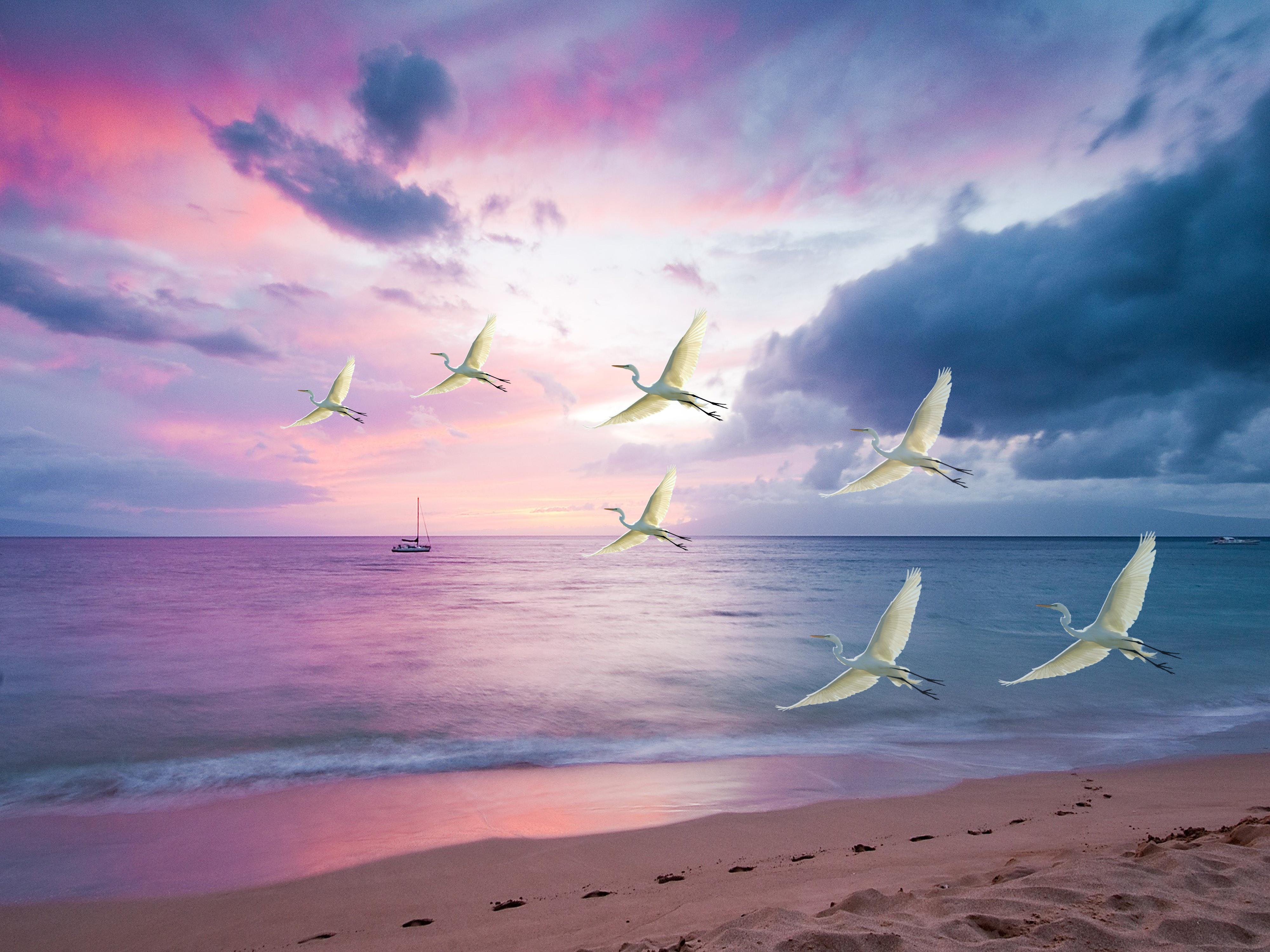 Beach Bird Flying Heron Sea Sunset 4000x3000
