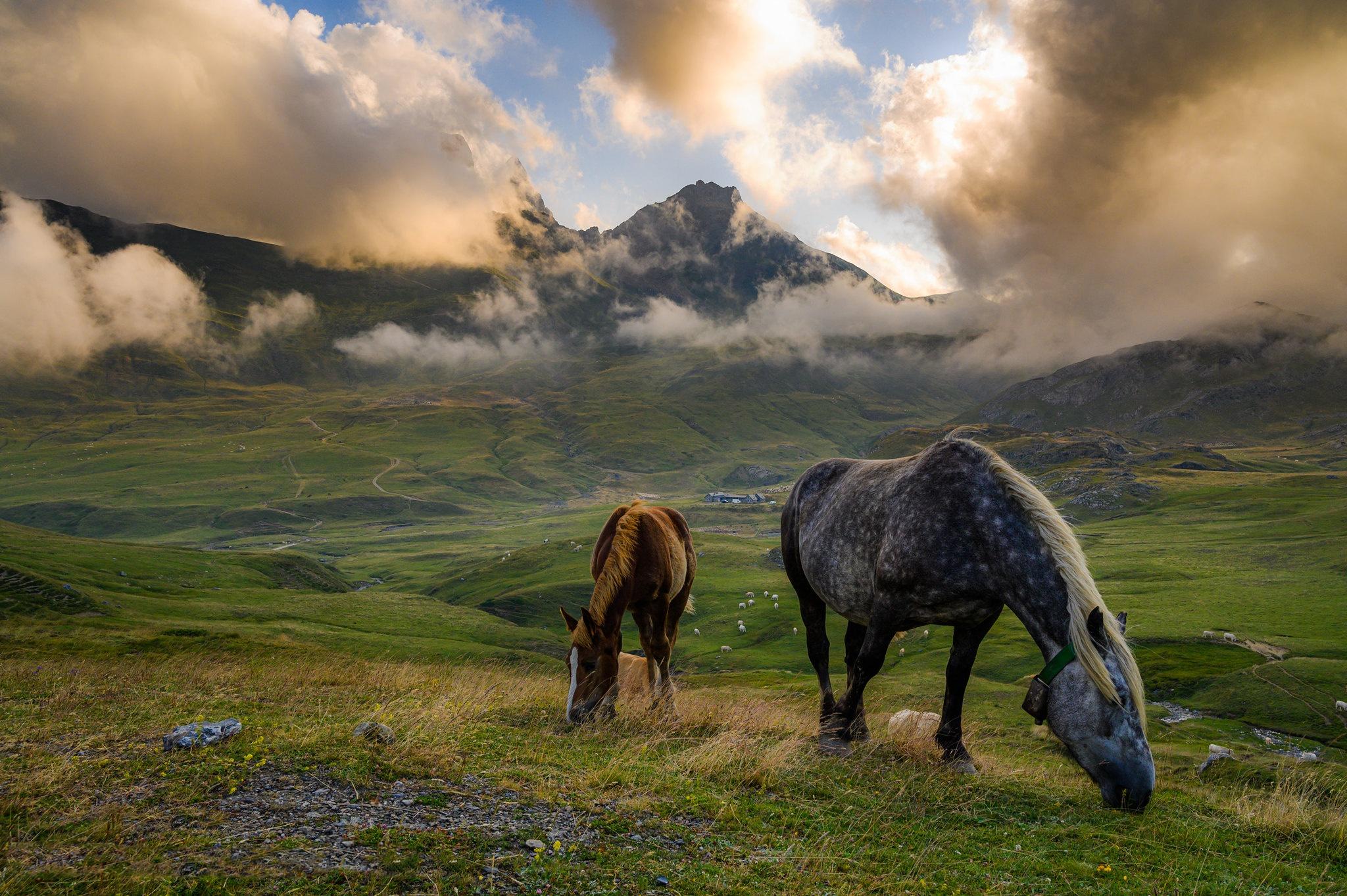 Cloud Fog Horse Mountain Pasture 2048x1363