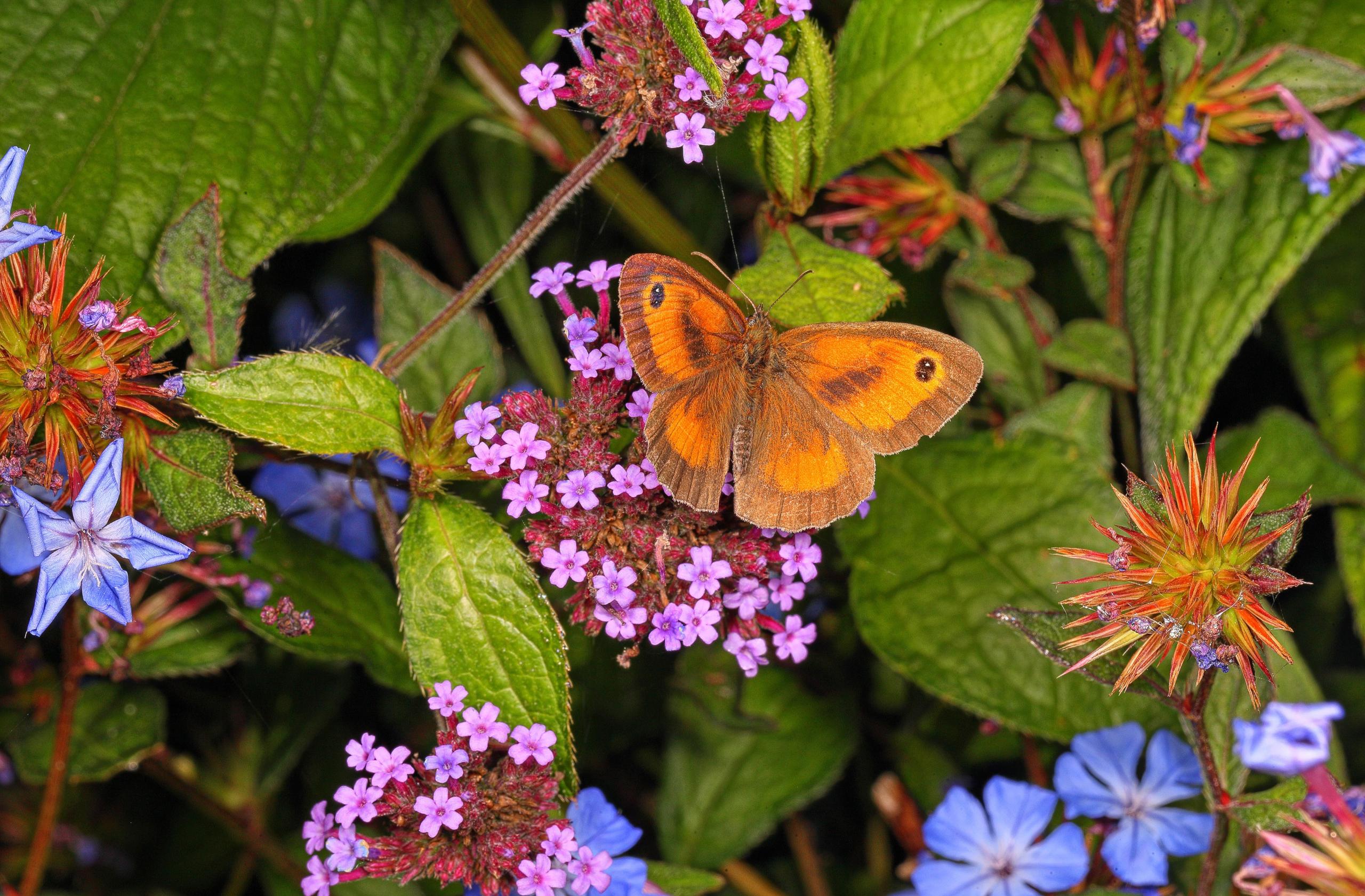 Butterfly Flower Macro 2560x1681