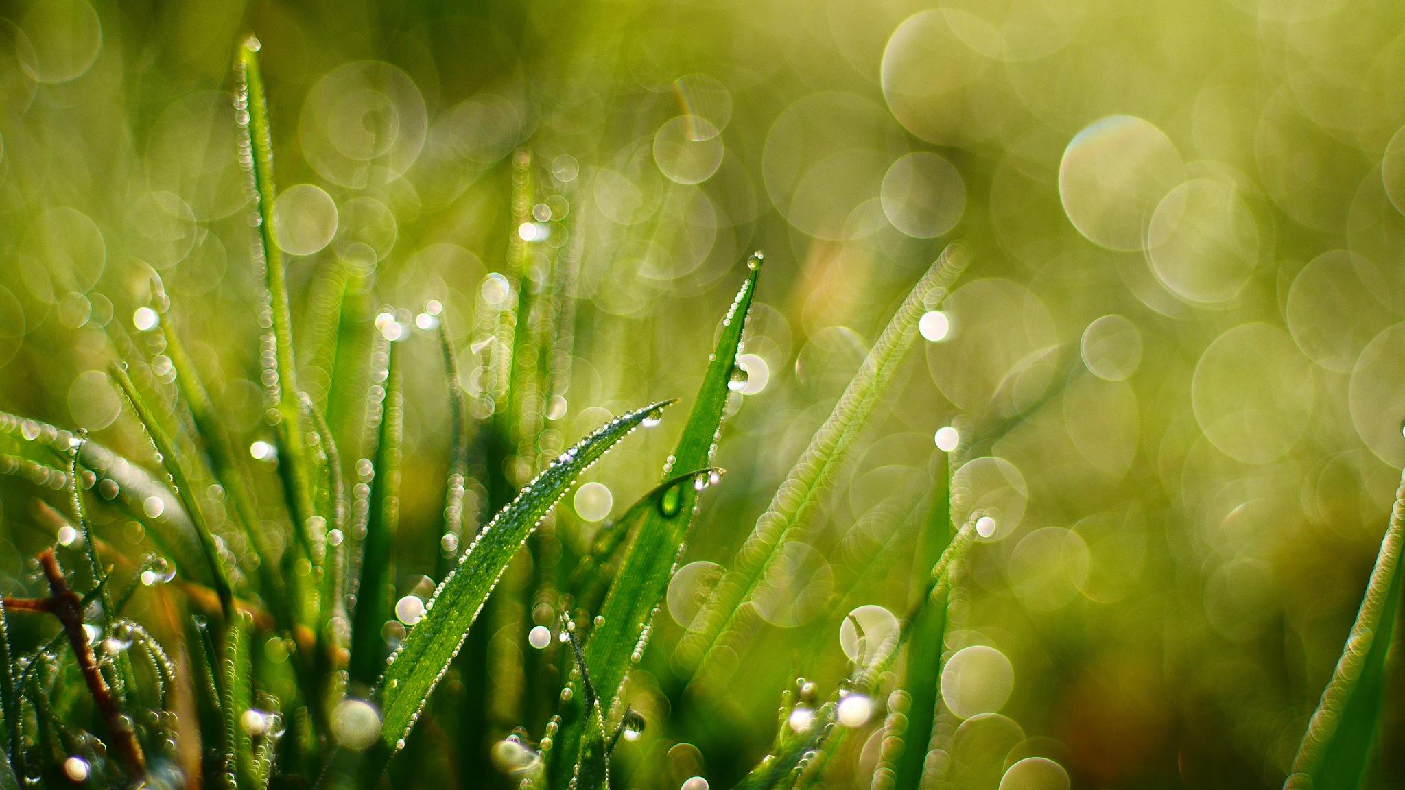 Bokeh Grass Macro Water Drop 2048x1152