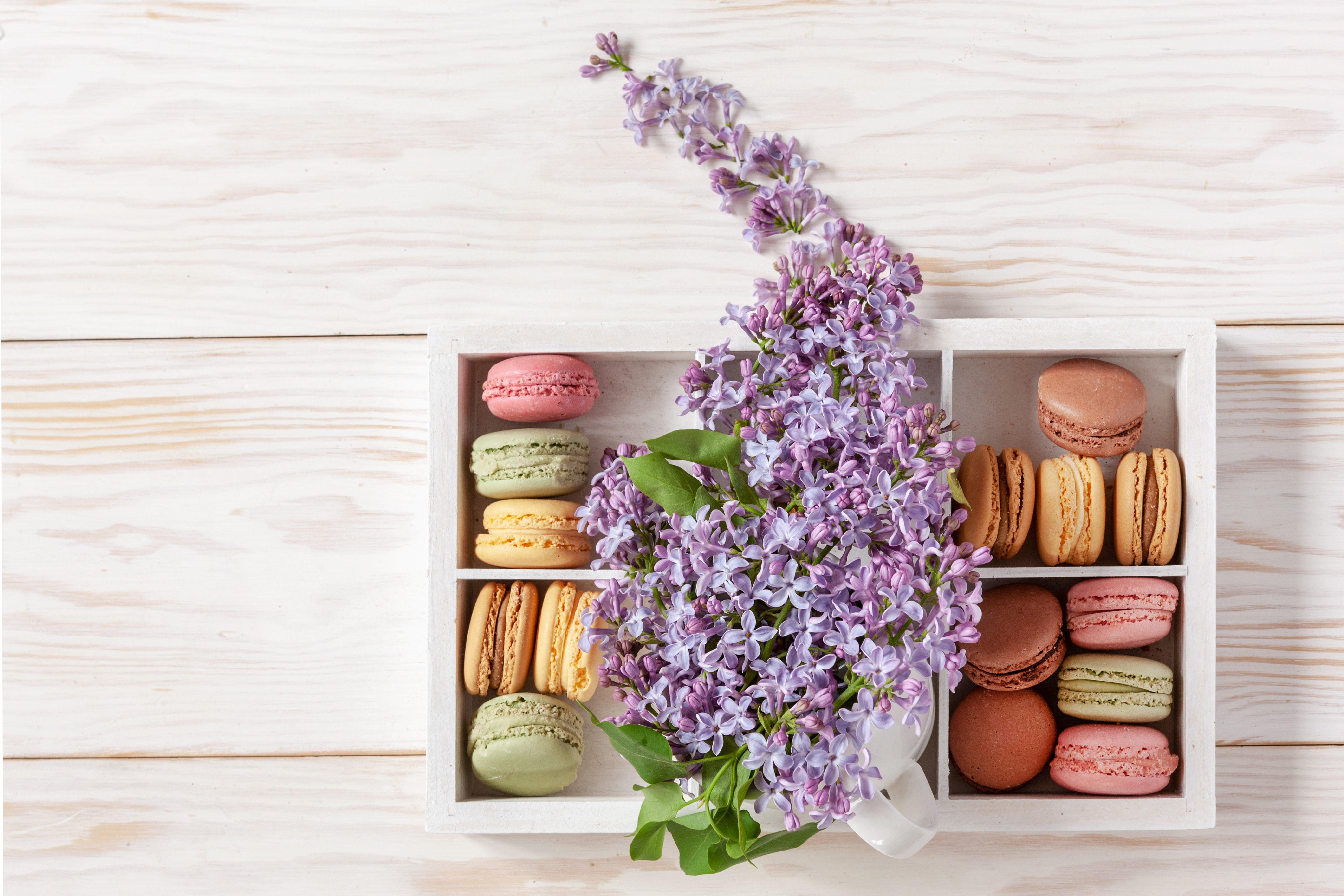 Flower Lilac Macaron Still Life Sweets 5583x3722