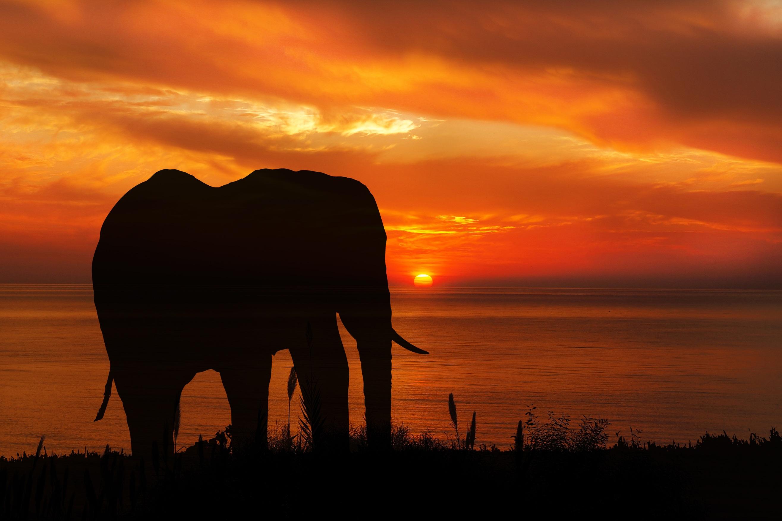 Elephant Silhouette Sunset 2631x1754