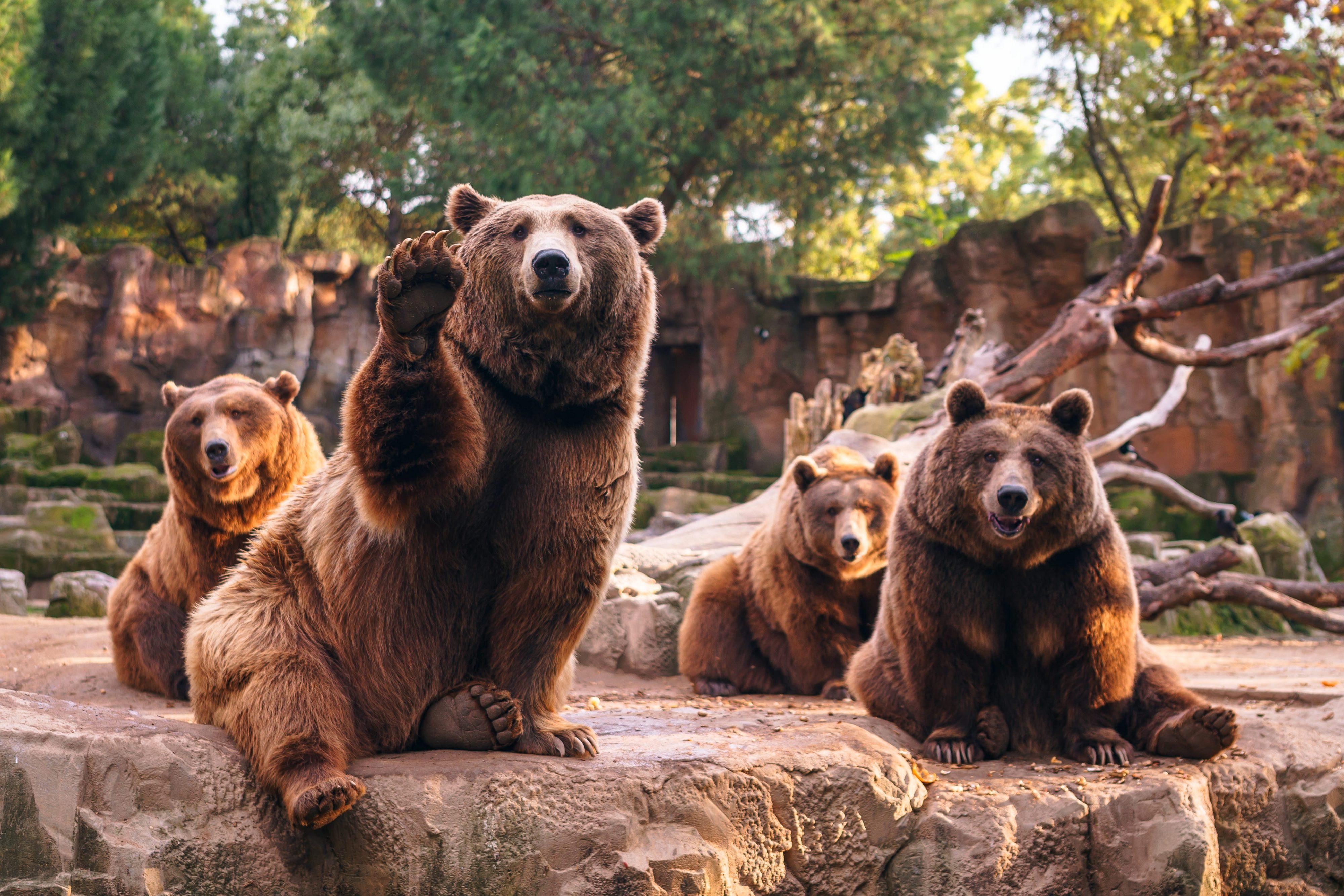 Bear Depth Of Field Zoo Predator Animal 4000x2667