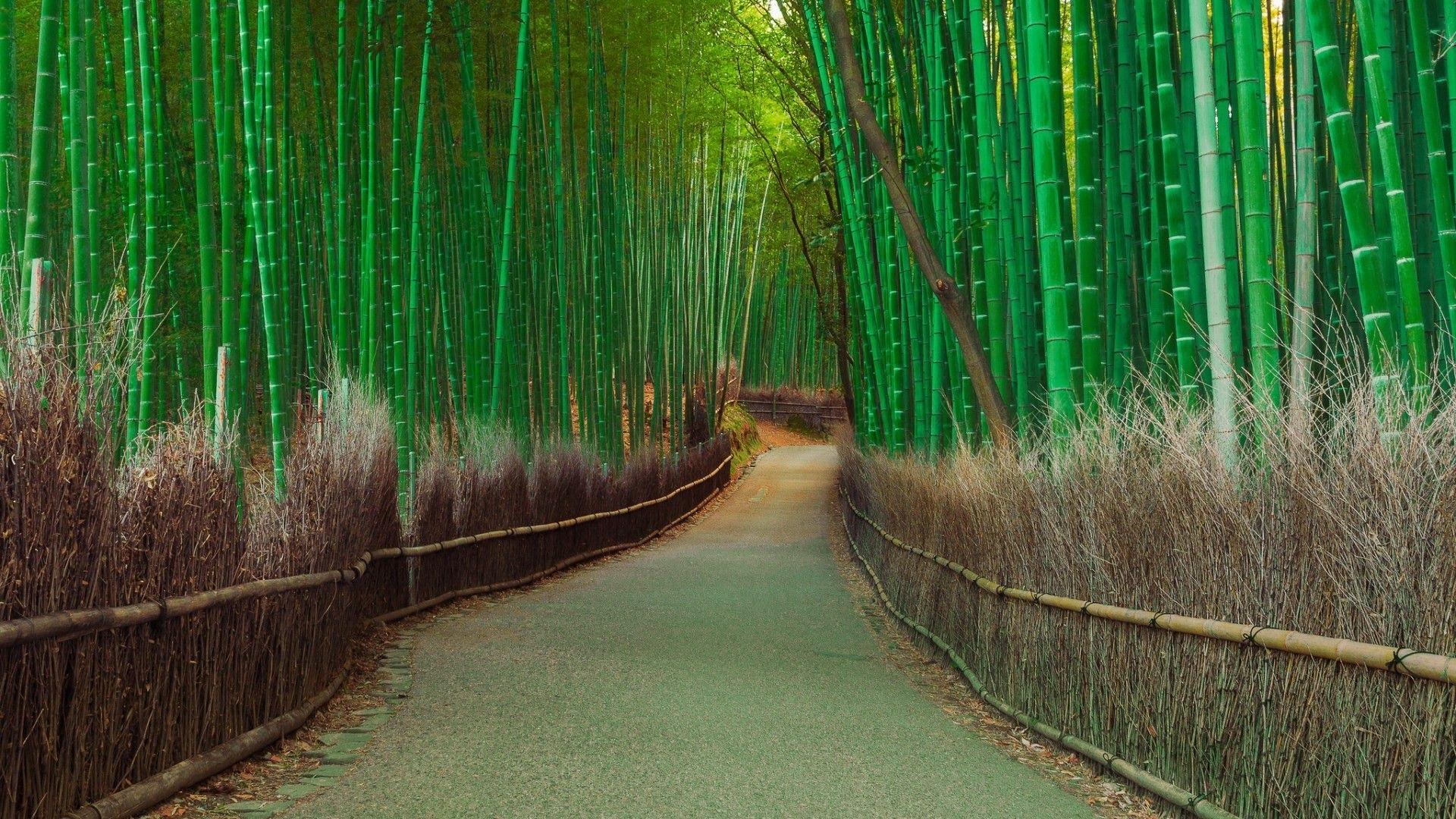 Bamboo Nature Path 1920x1080