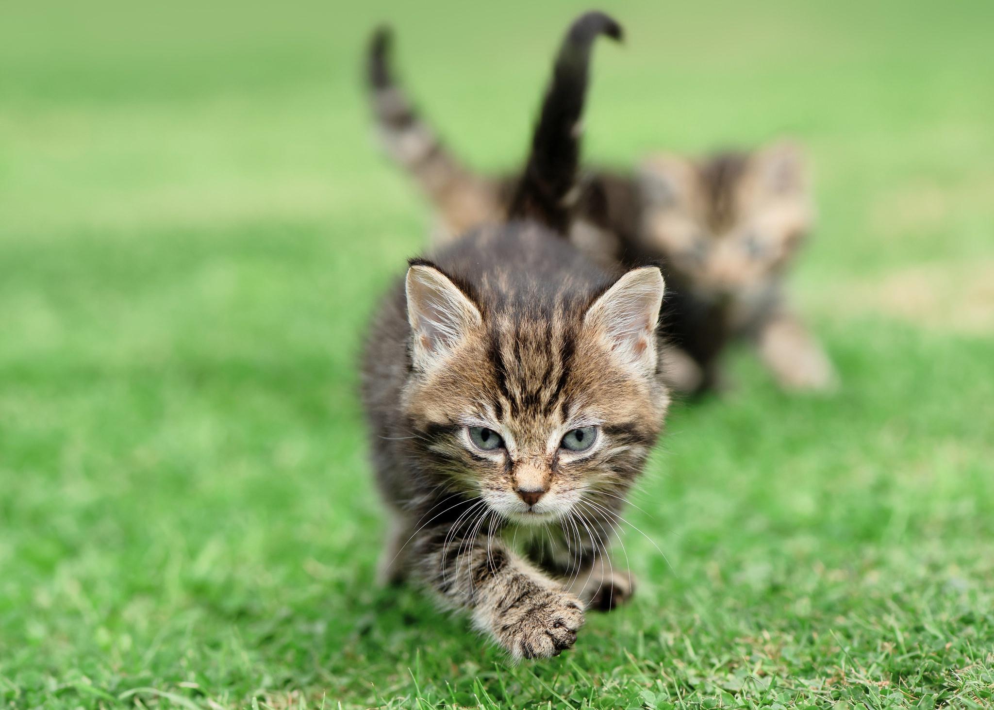 Baby Animal Cat Kitten Pet 2048x1463