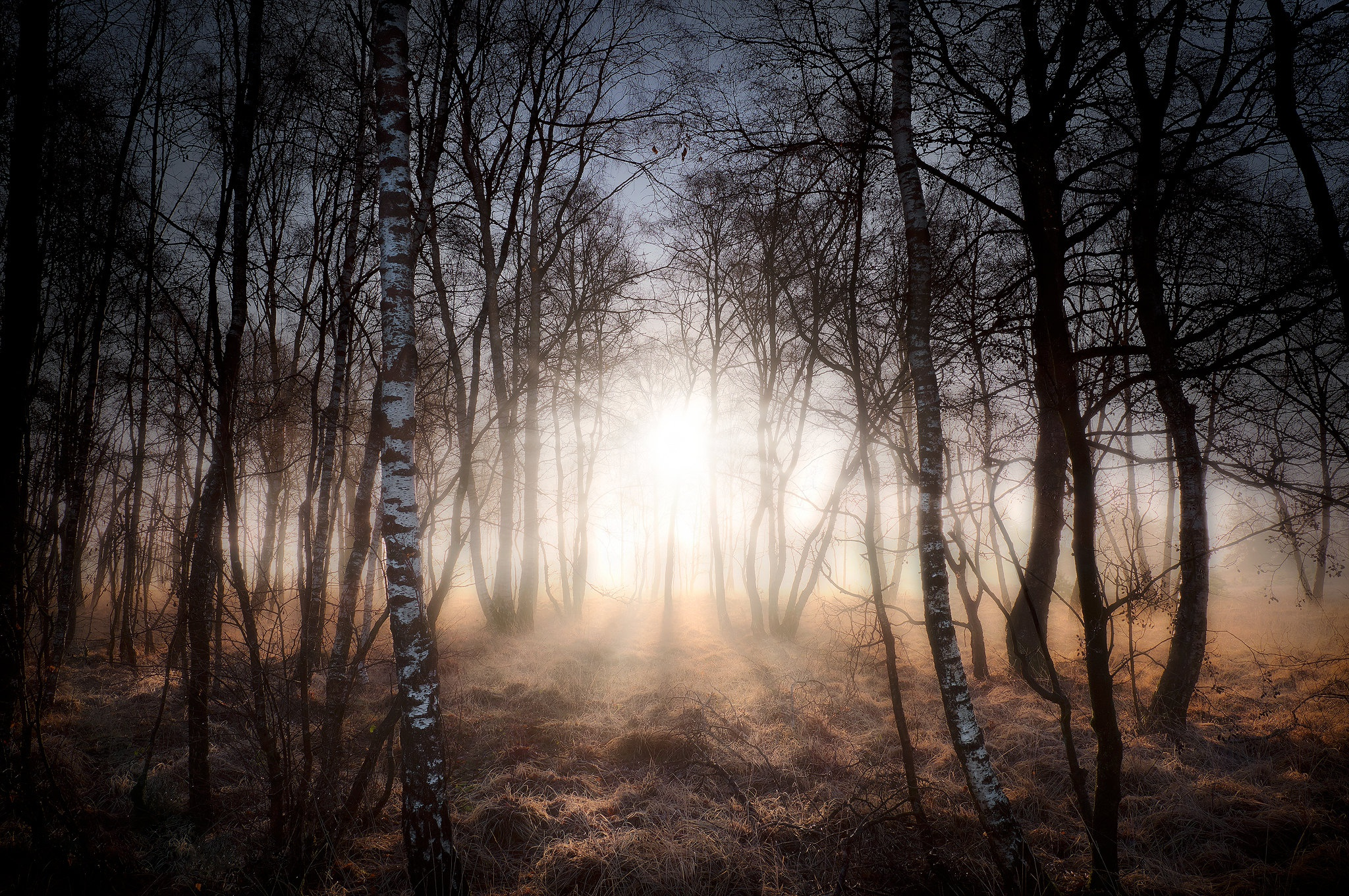 Forest Nature Sunbeam Tree 2048x1361