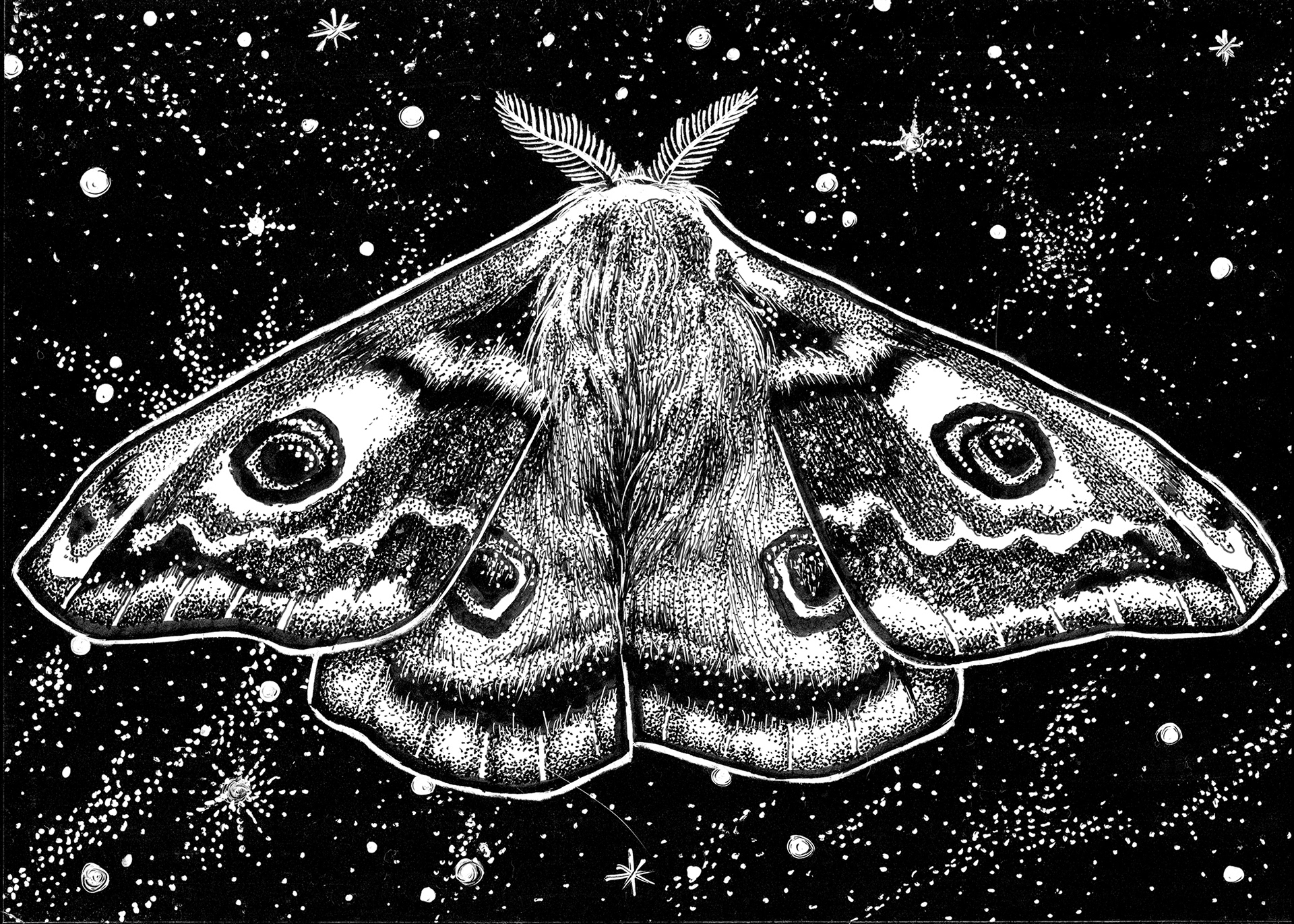 Moth Sketches Monochrome 1920x1371