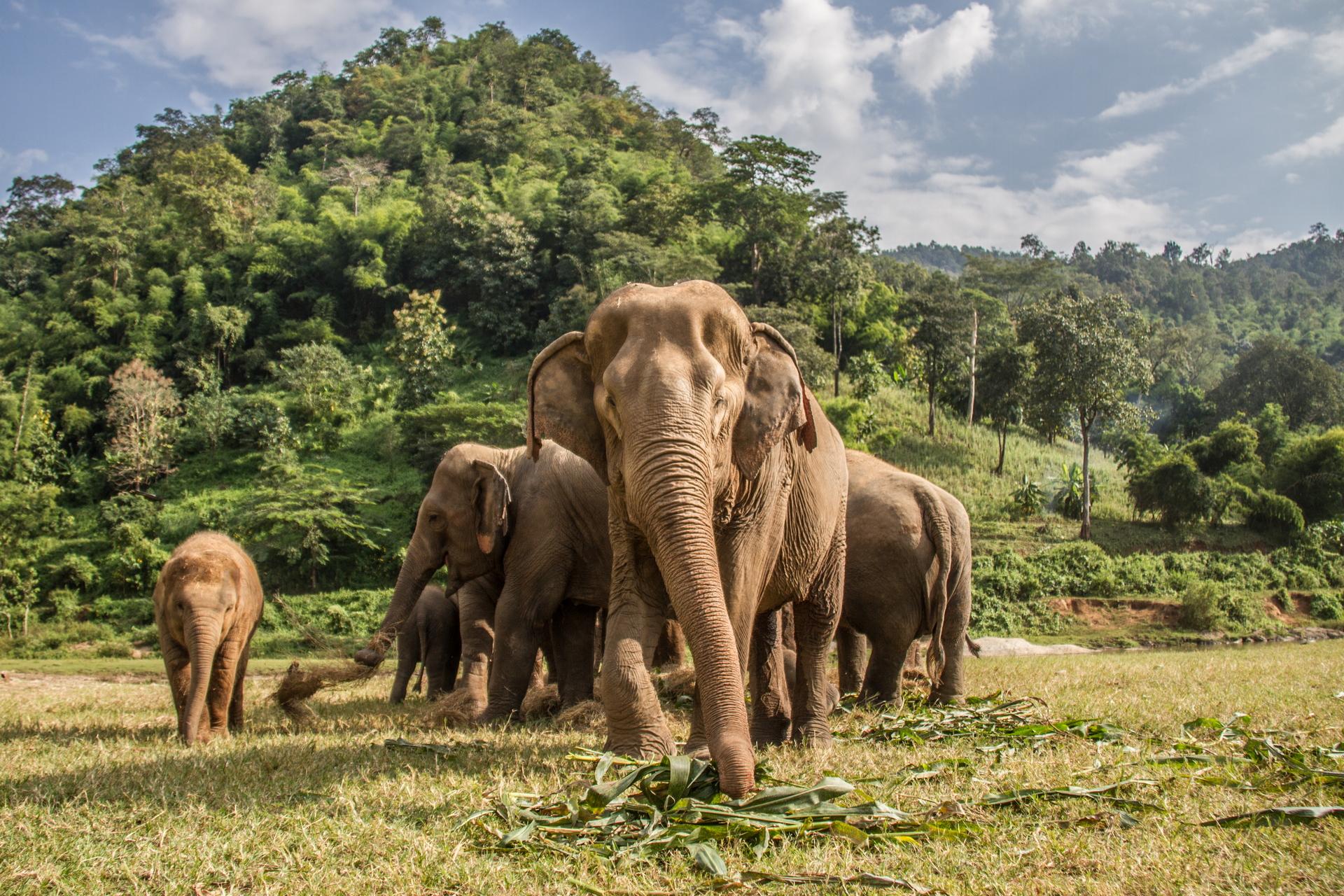 Animal Elephant 1920x1280