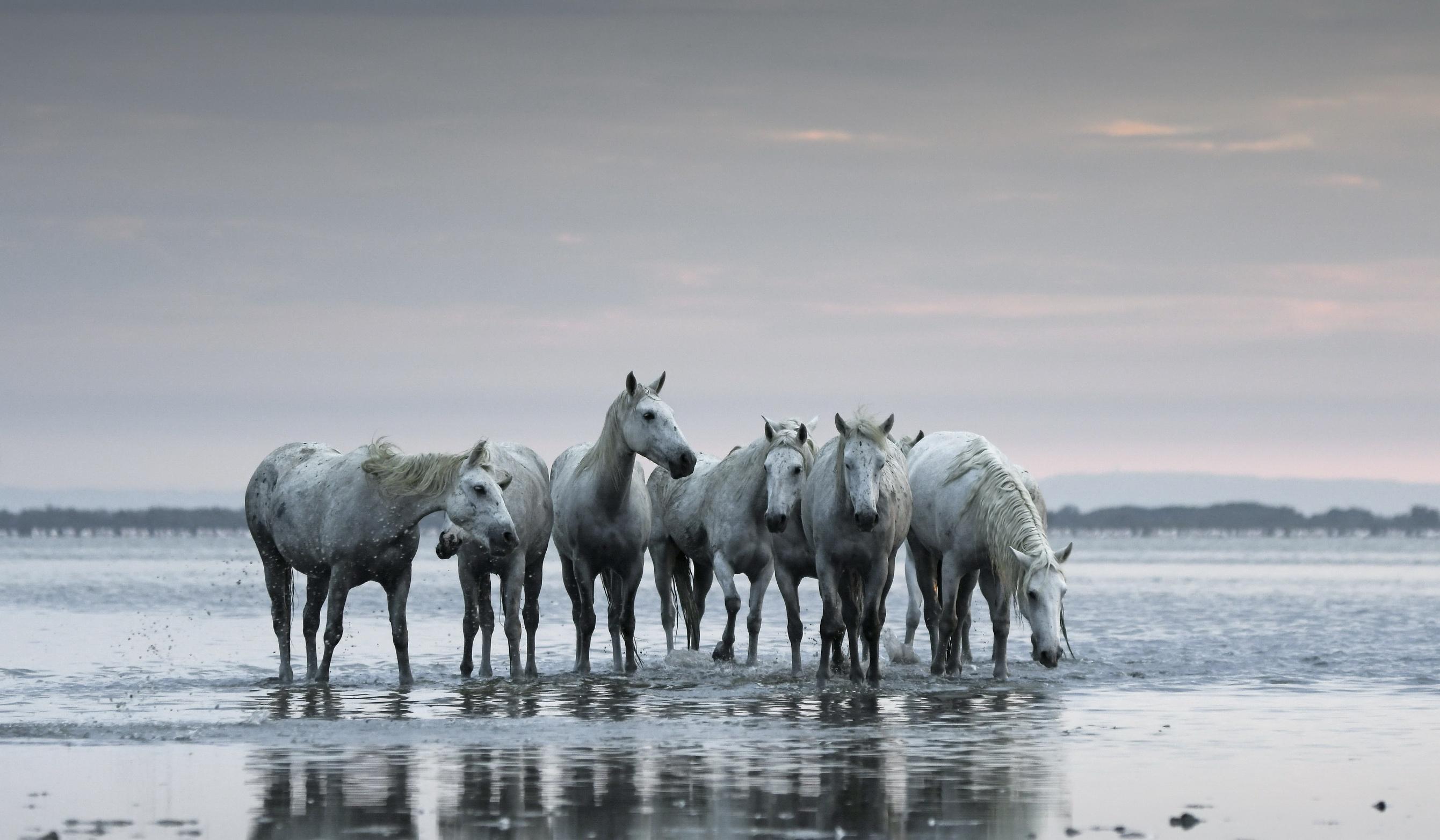 Horse 2681x1565