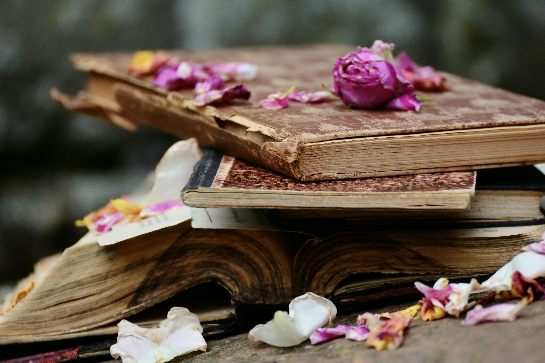 Book Flower Petal Rose 6000x4000
