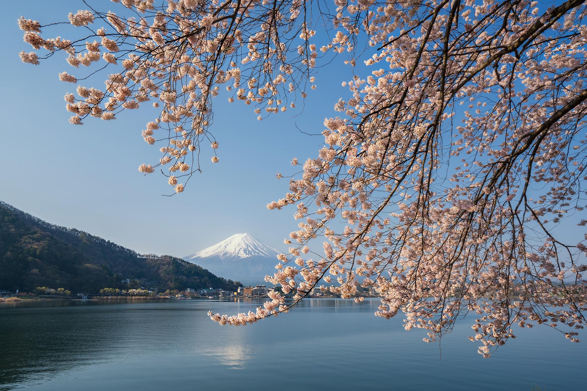 Japan Lake Sakura Spring 2048x1365